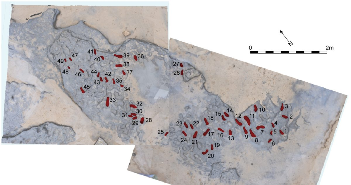 Photogrammetry of the Happisburgh footprints show the group's orientation and direction. Photo by Ashton et al.