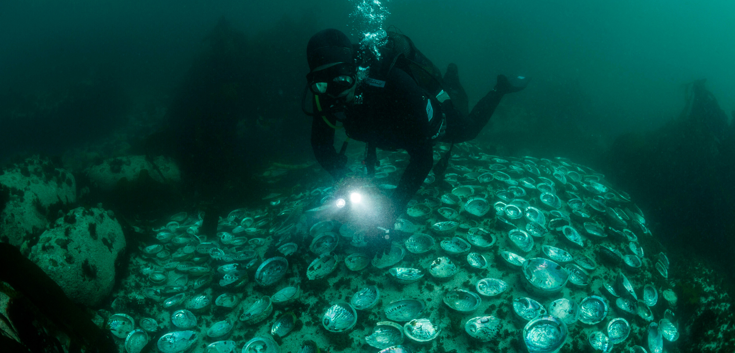 diver and abalone shells
