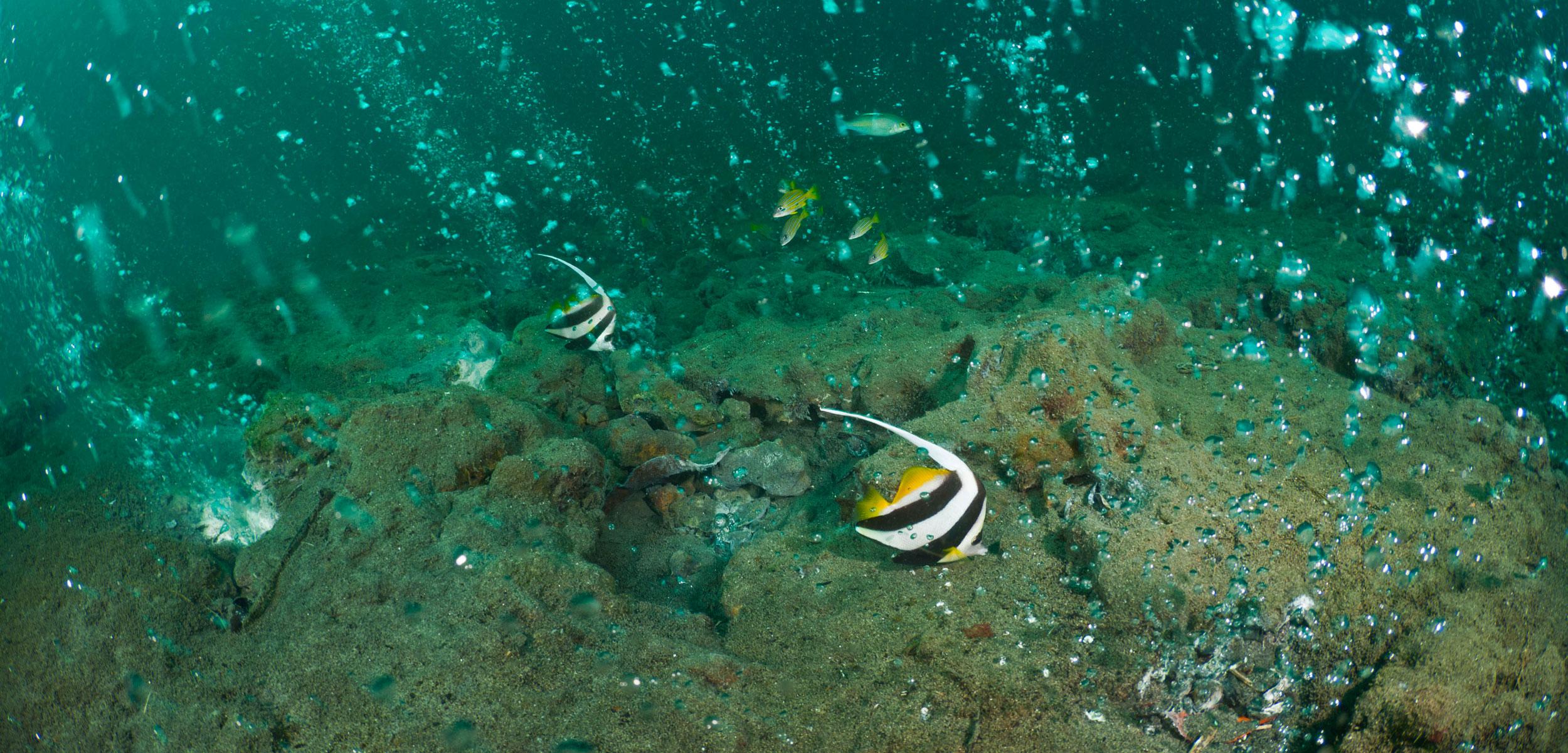 An underwater fumarole releasing bubbles of gas