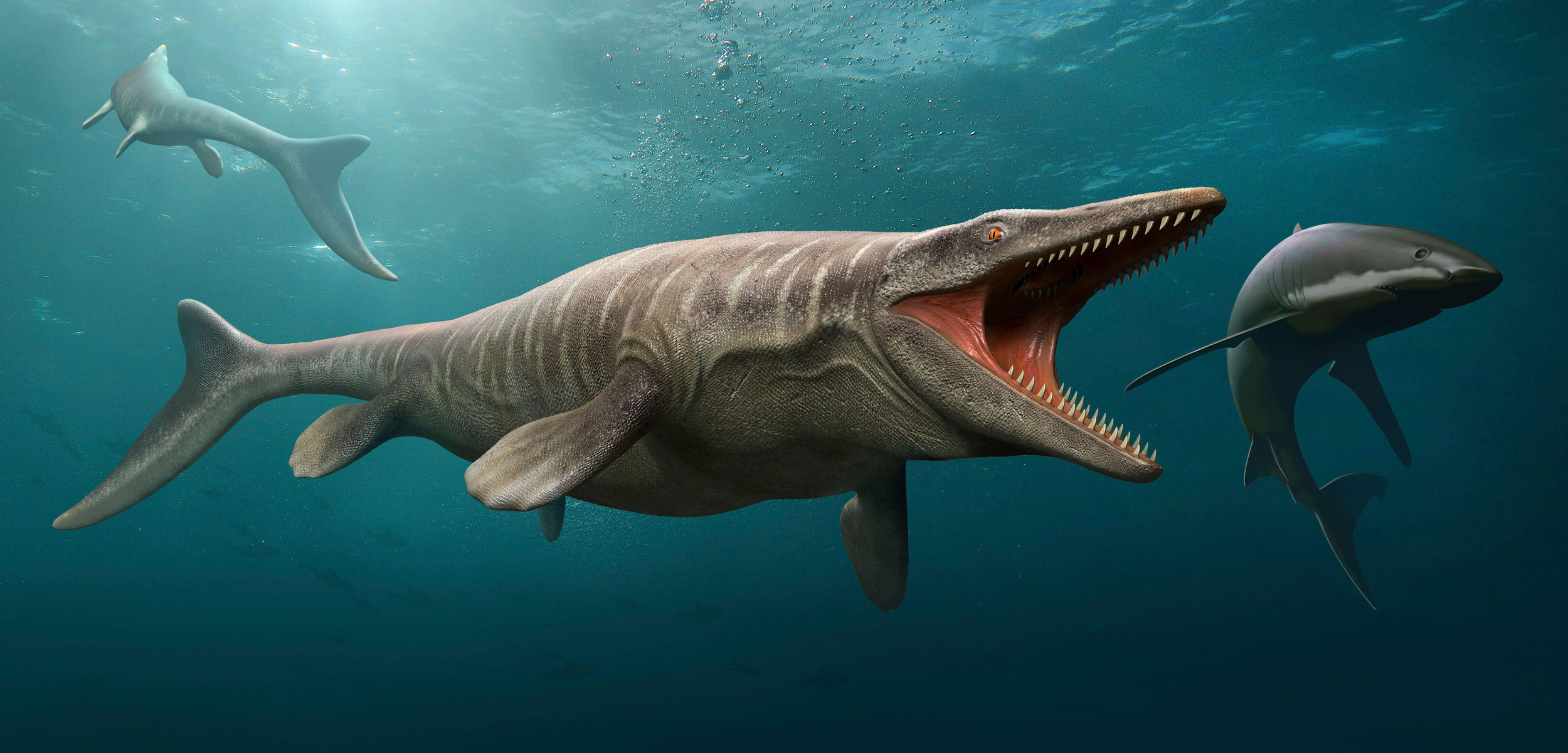 Artistic renditions of mosasaurs and other ancient sea life.