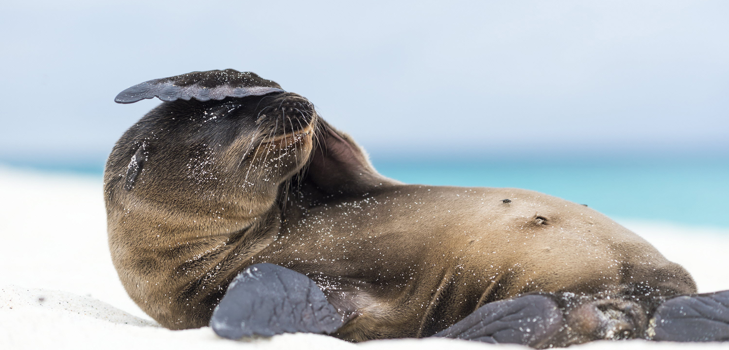 Small Sea Lions with Big Personalities