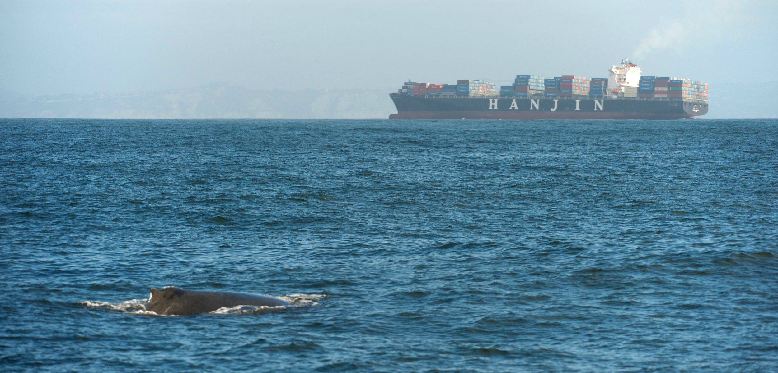 a humpback whale surfaces with a container ship in the distance