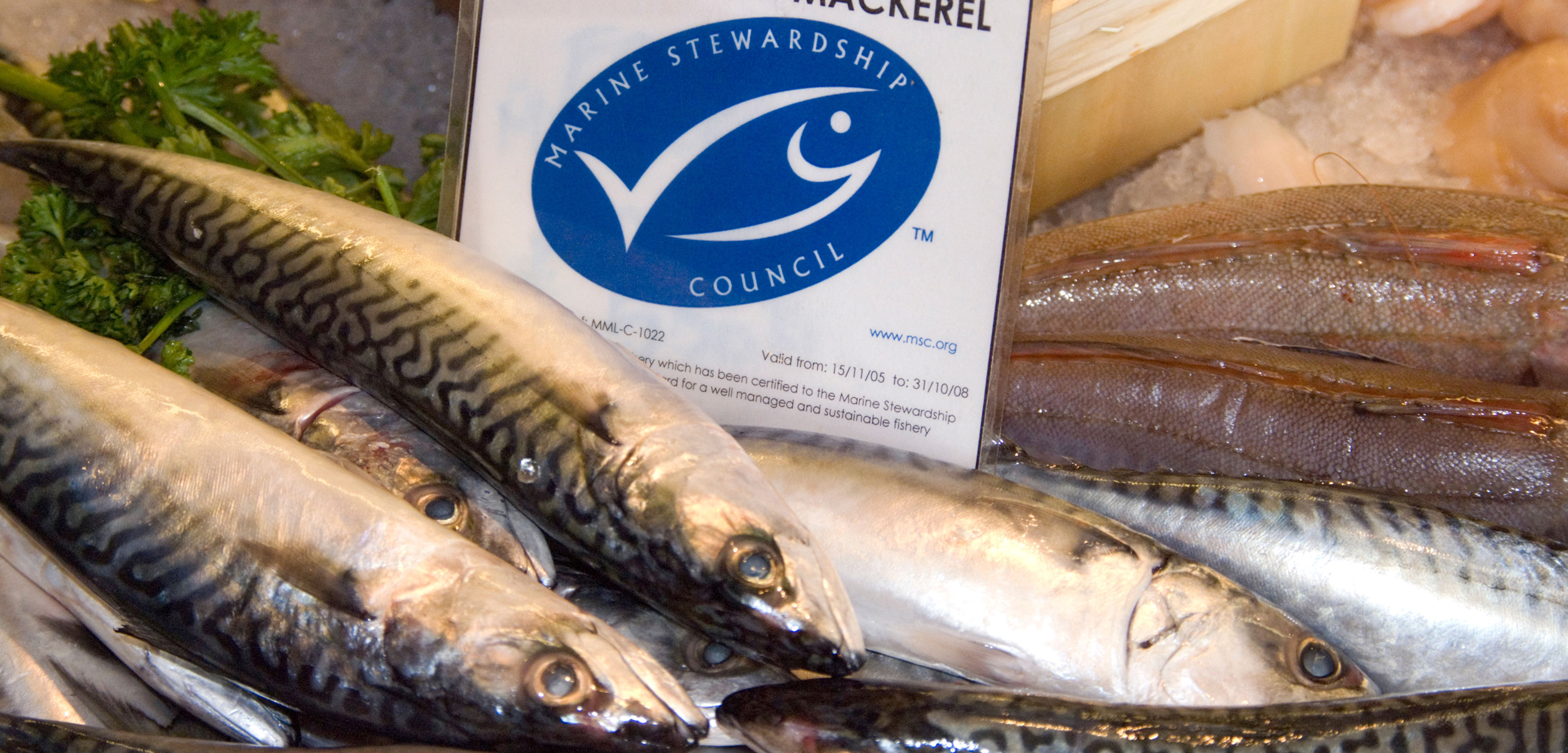 The flawed promise of certified sustainable seafood for Sustainable fishing definition