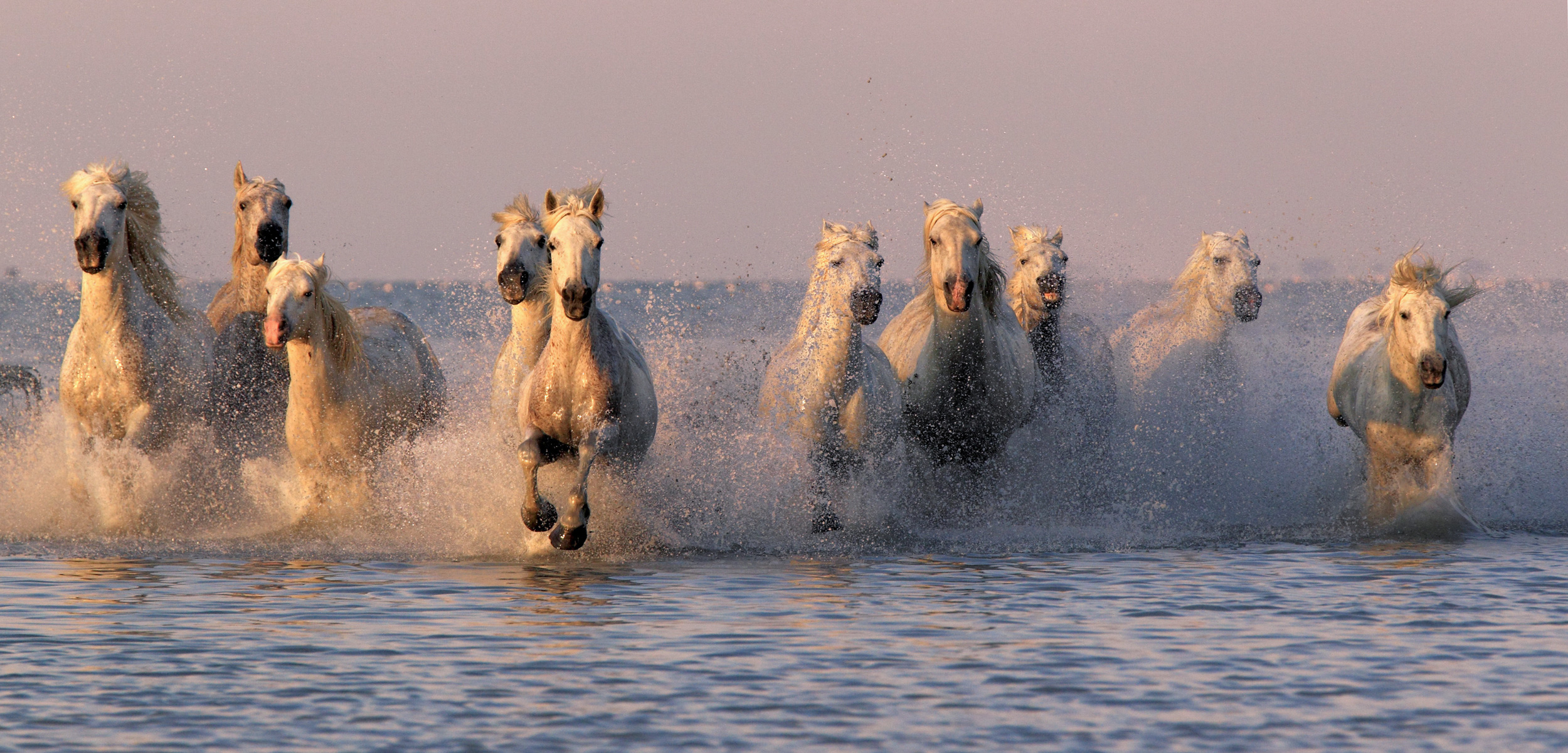 Horses have adapted to nearly every environment, including the world's coasts. Photo by FLPA/Alamy Stock Photo