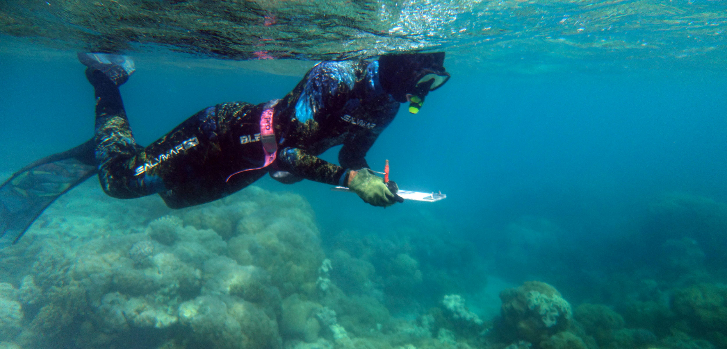 Snorkeller conducting underwater survey of coral health, Lizard Island, Great Barrier Reef, Queensland, Australia
