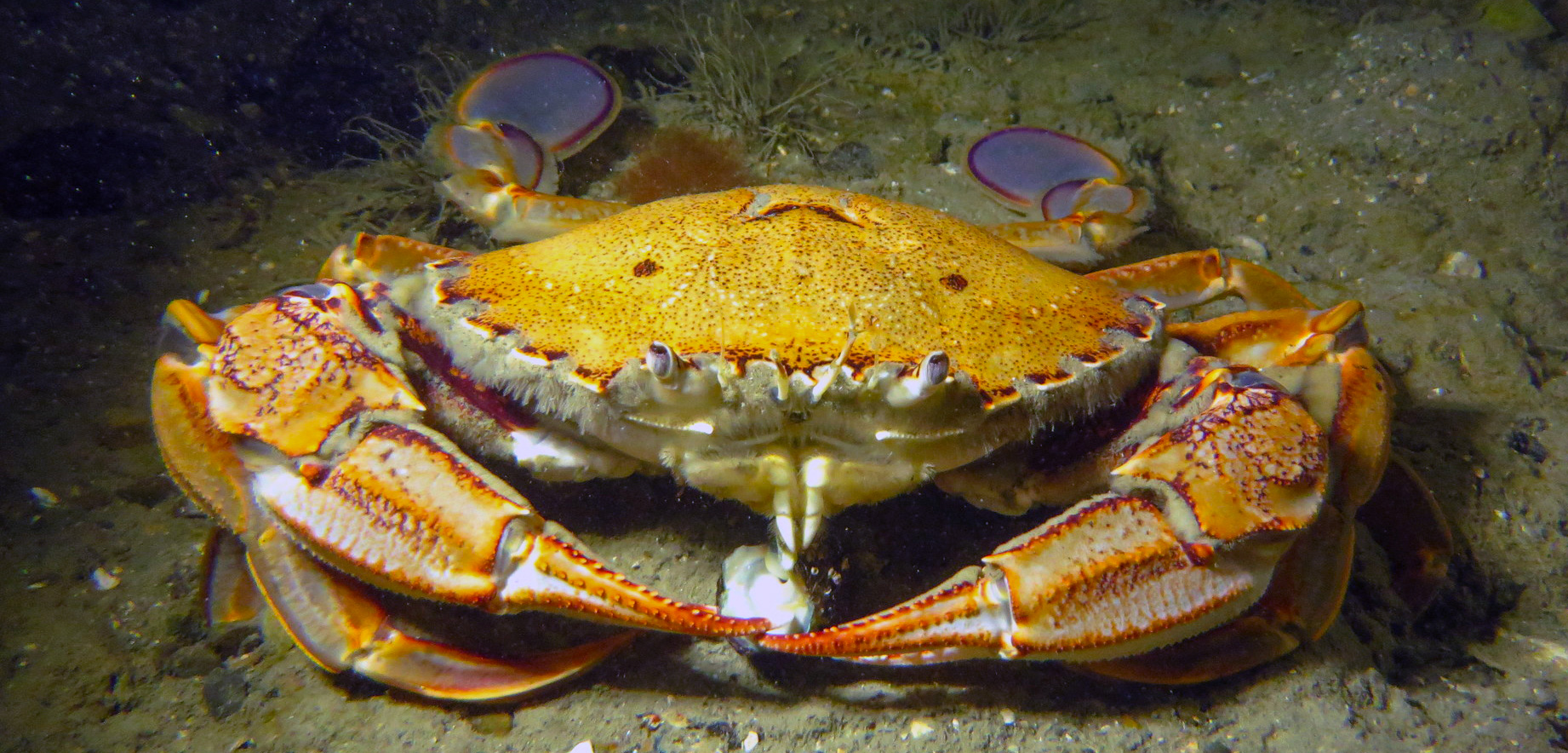 These Crabs Are Unexpectedly Chatty
