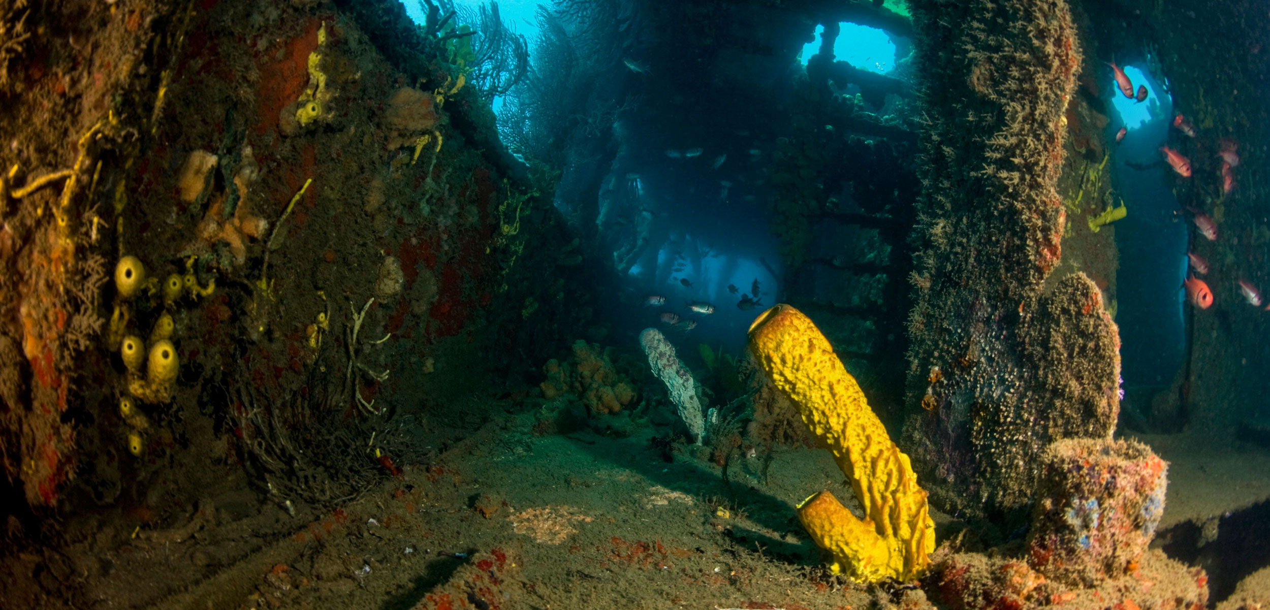sea life growing on sunken ship
