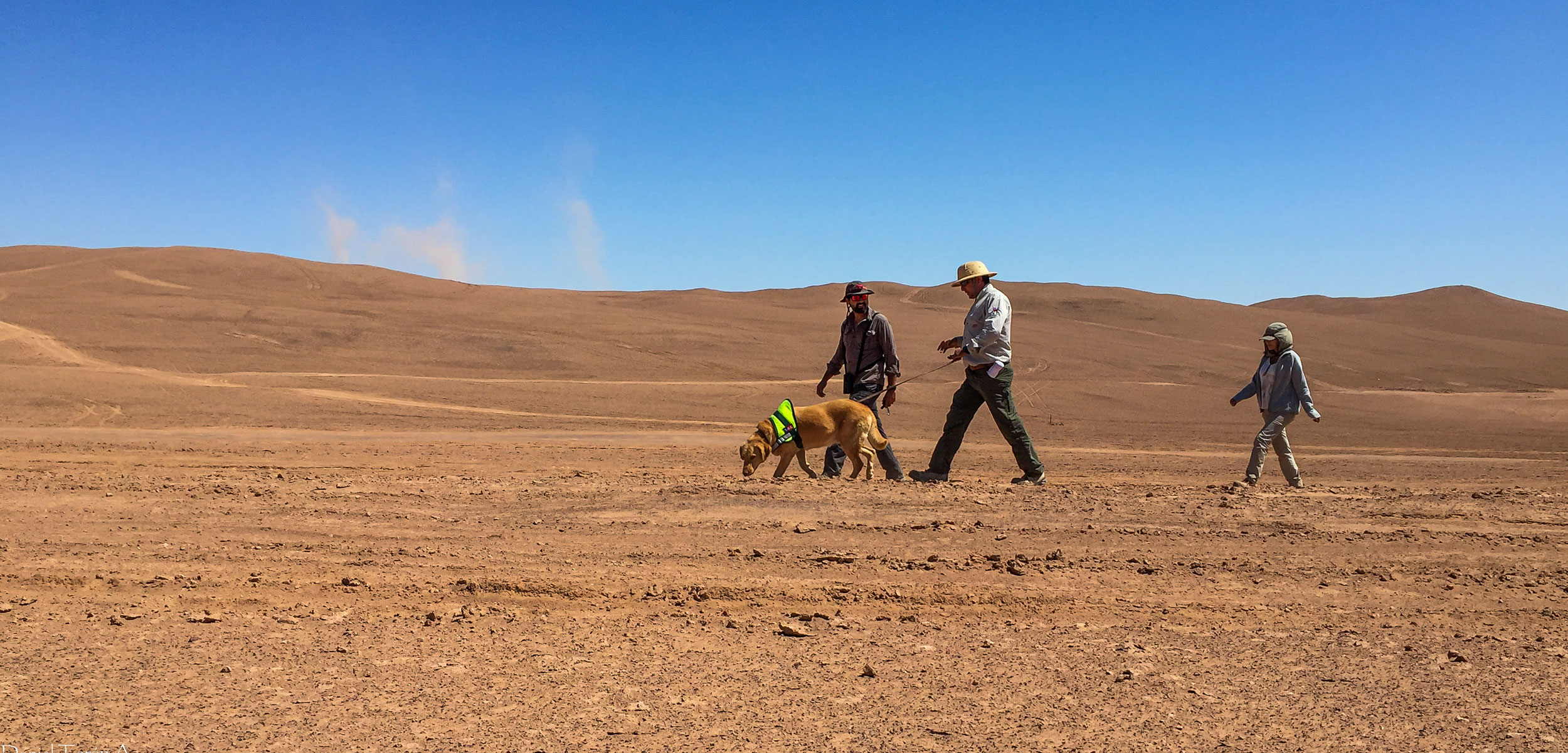 researches with a dog in the Atacama desert