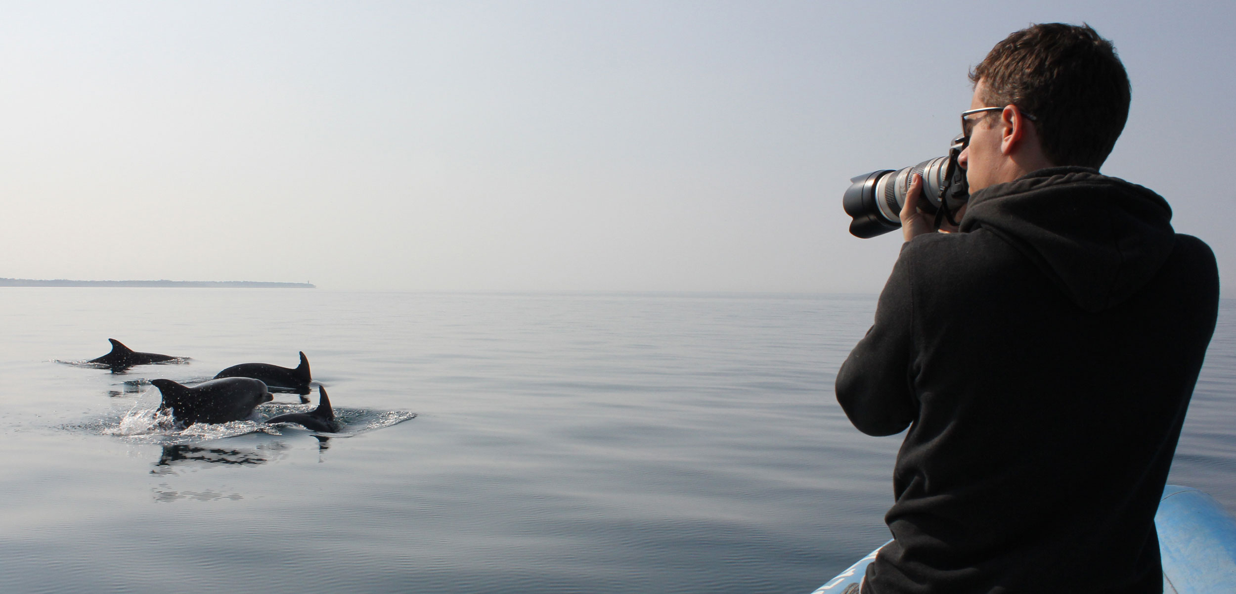 Researcher photographs bottlenose dolphins