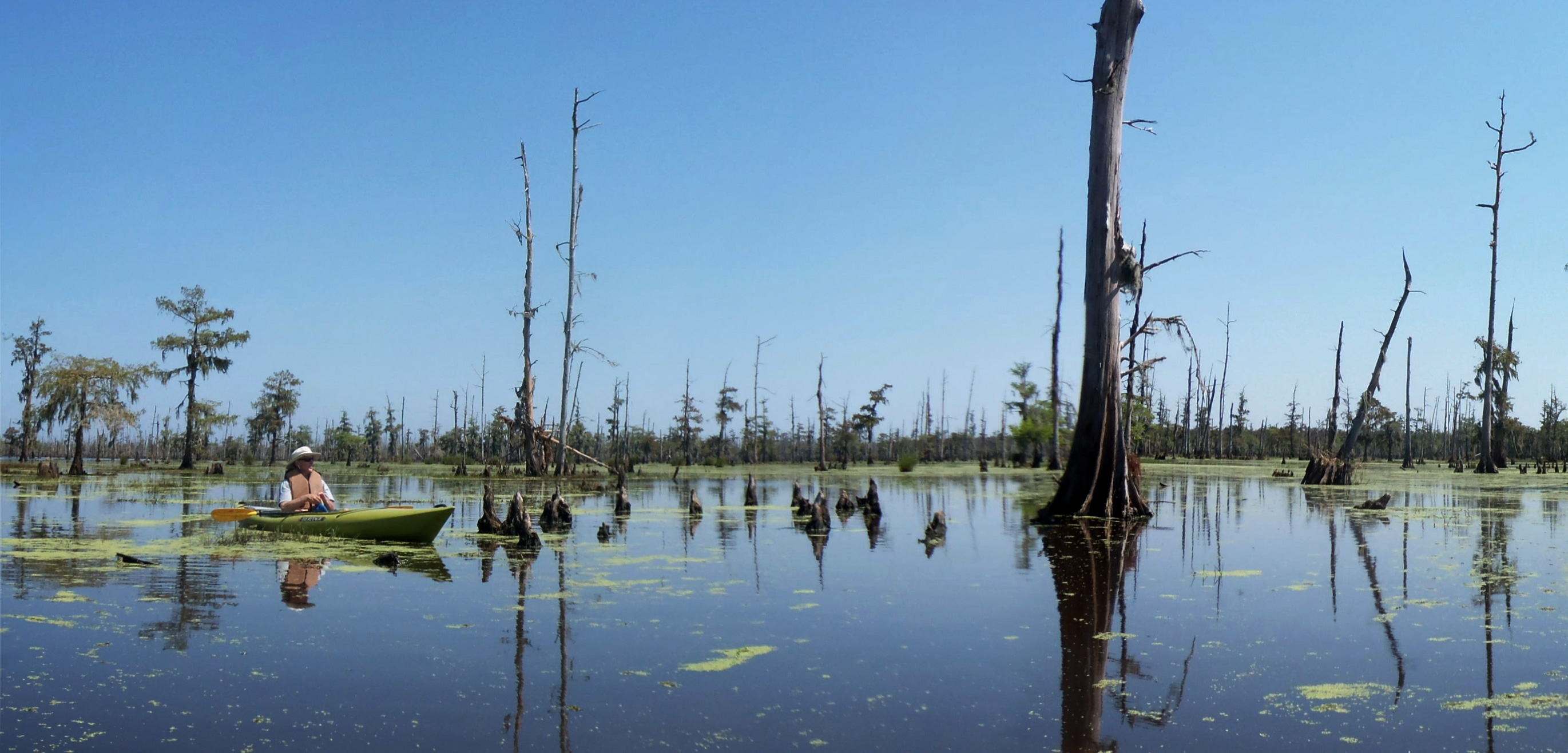 "Paddling in a Louisiana bayou, amid drowned trees and a wealth of wildlife, can make you ""forget about civilization,"" says author Richard Goodman. Photo by John Hazlett"