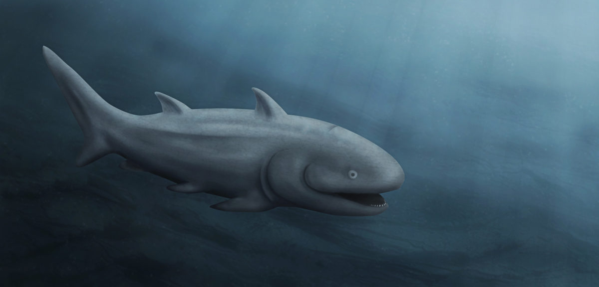 An artist's rendition of how the common ancestor of bony and cartilaginous fish might have appeared. Illustration by Mark Garrison