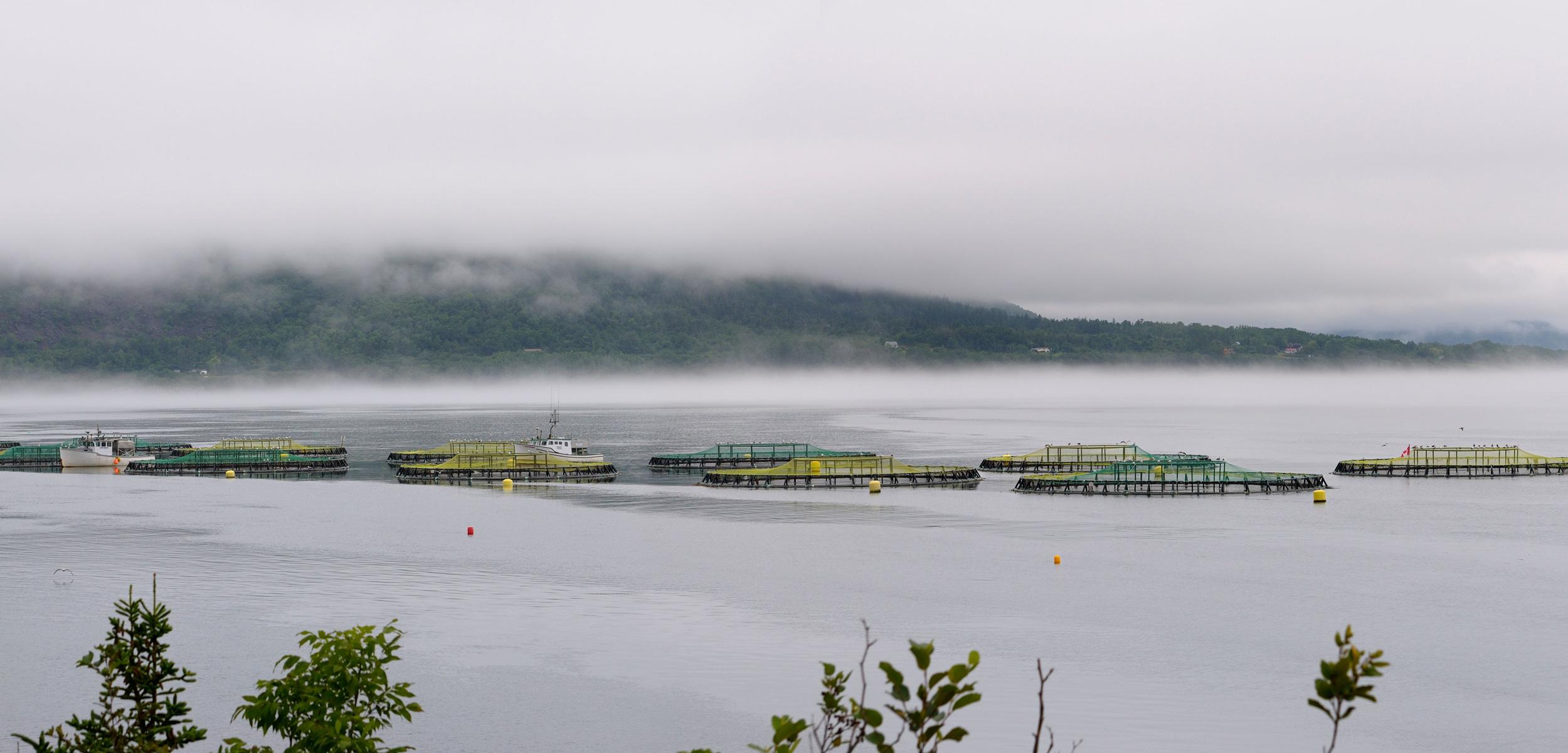 salmon farms, Nova Scotia