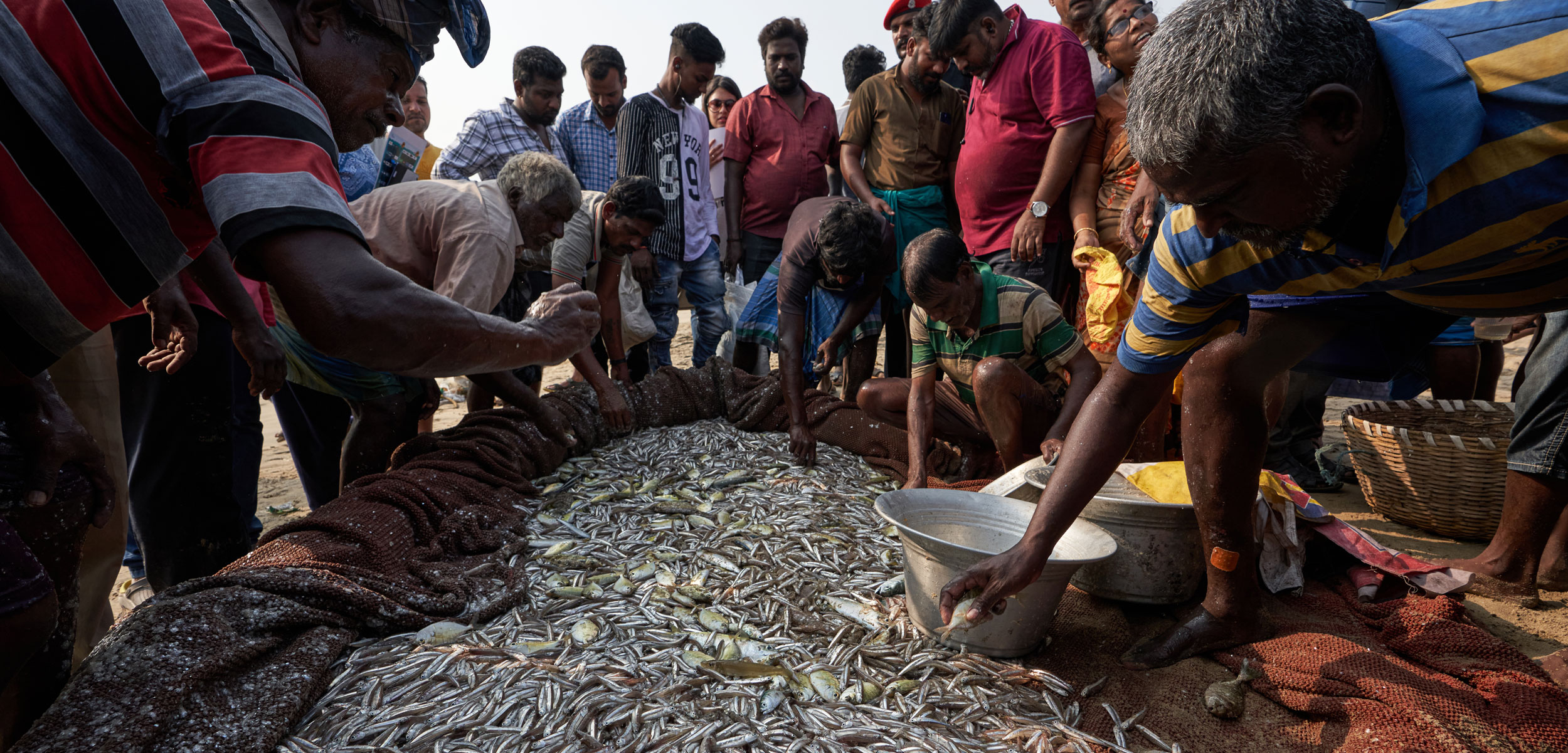 fishers sorting fish in Chennai, India