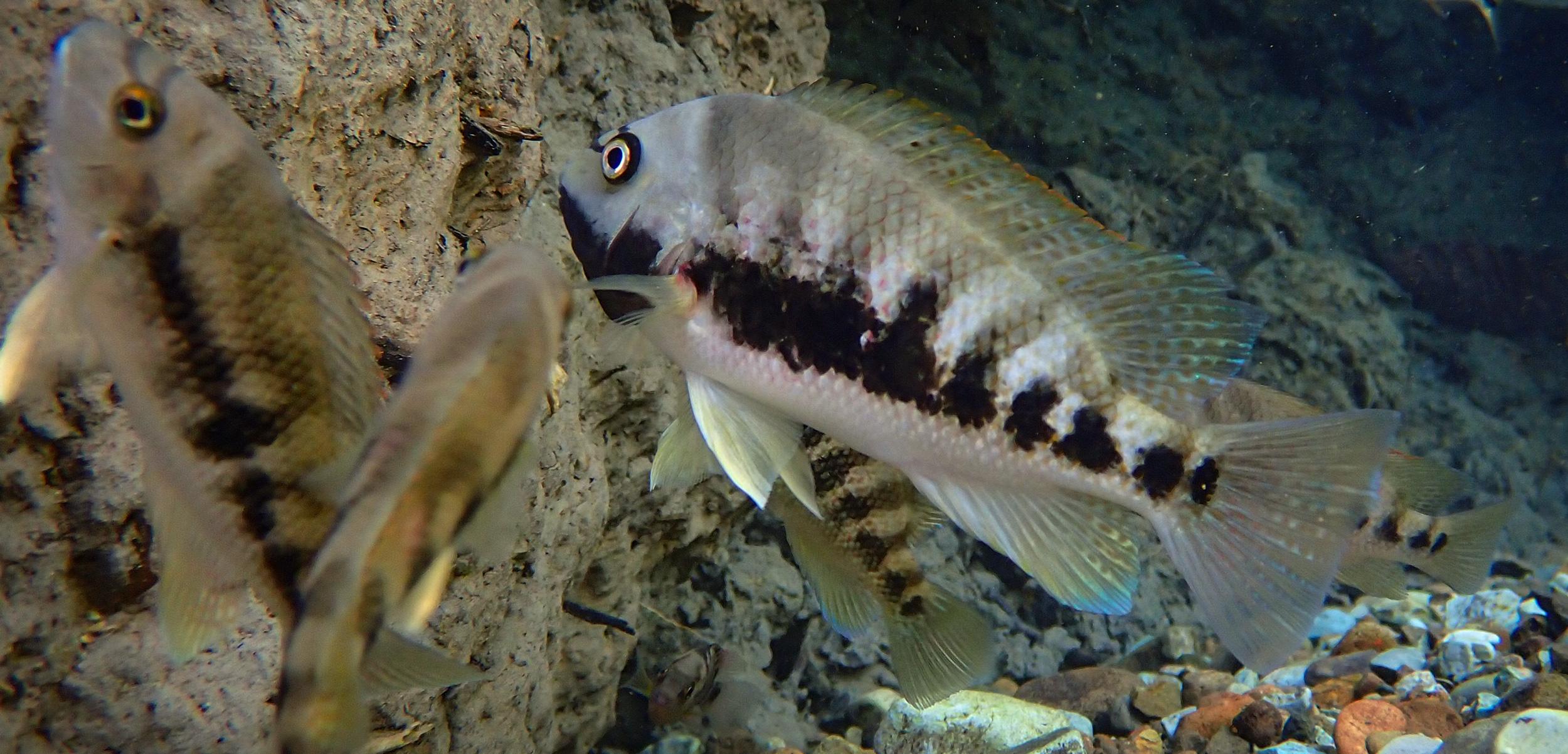 underwater fish in Costa Rica