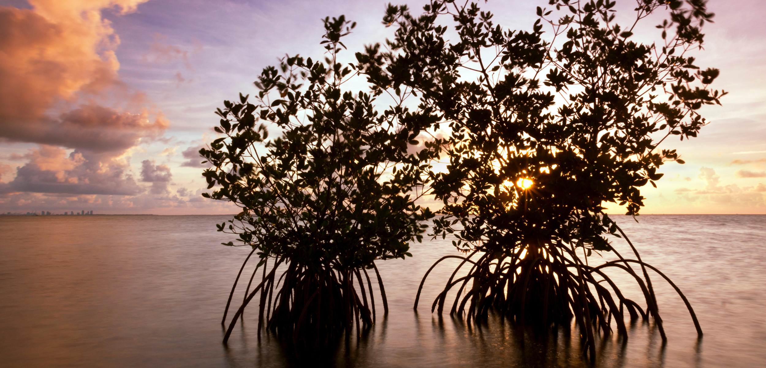 Mangroves are spreading throughout coastal Florida—and that's not necessarily a good thing. Photo by Constance Mier/Alamy Stock Photo