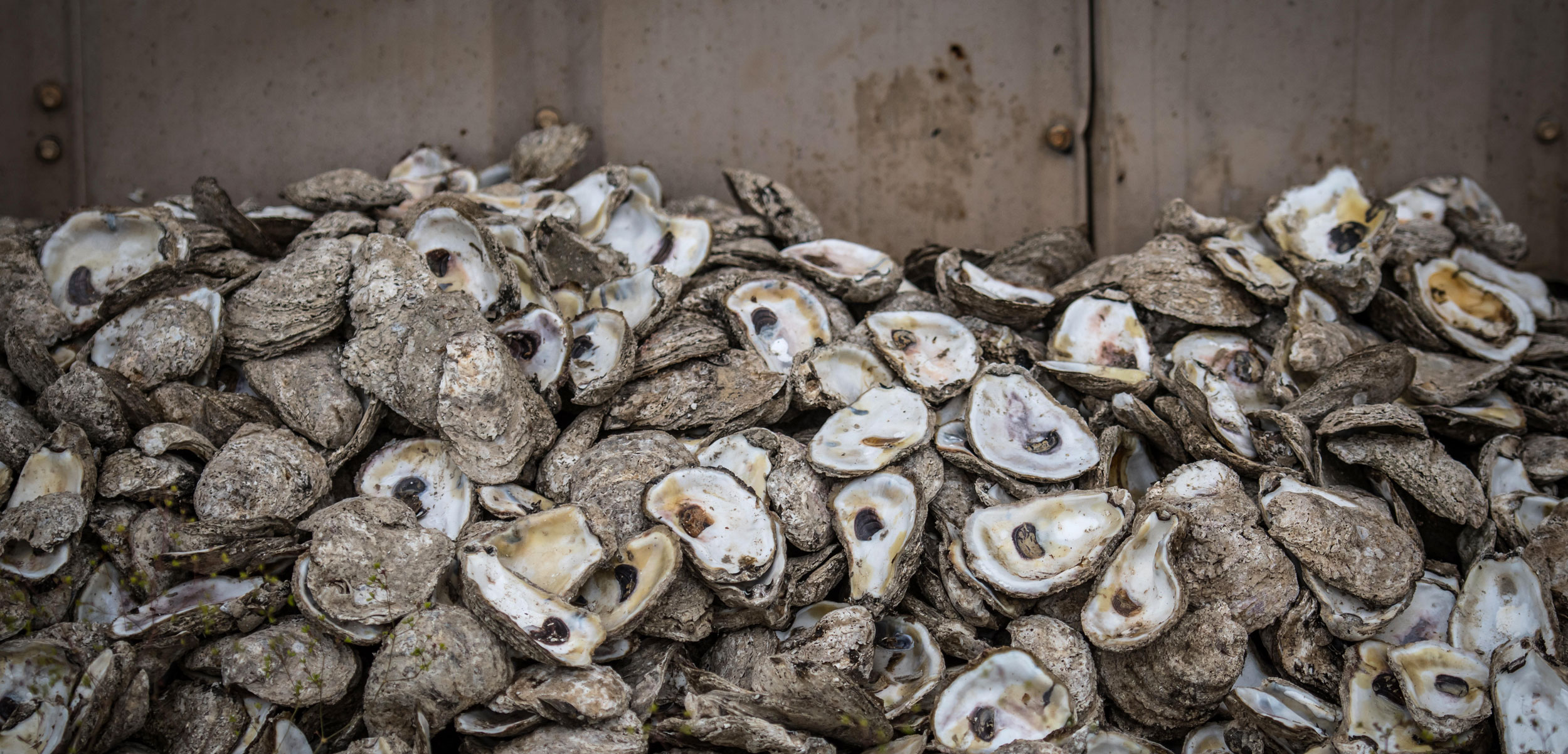 stack of oyster shells against a wall