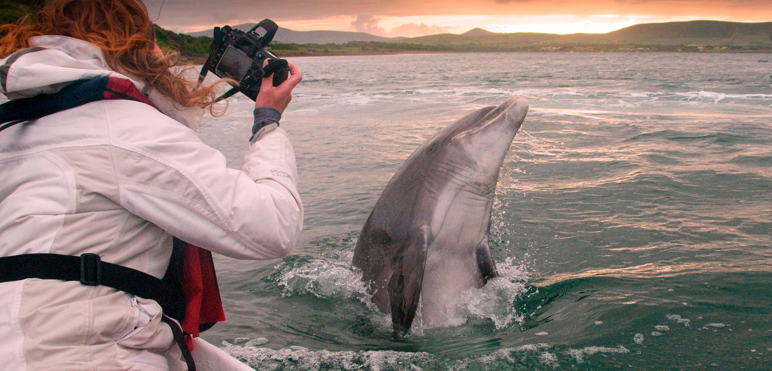 woman photographs Fungie the Dolphin in Dingle, Ireland