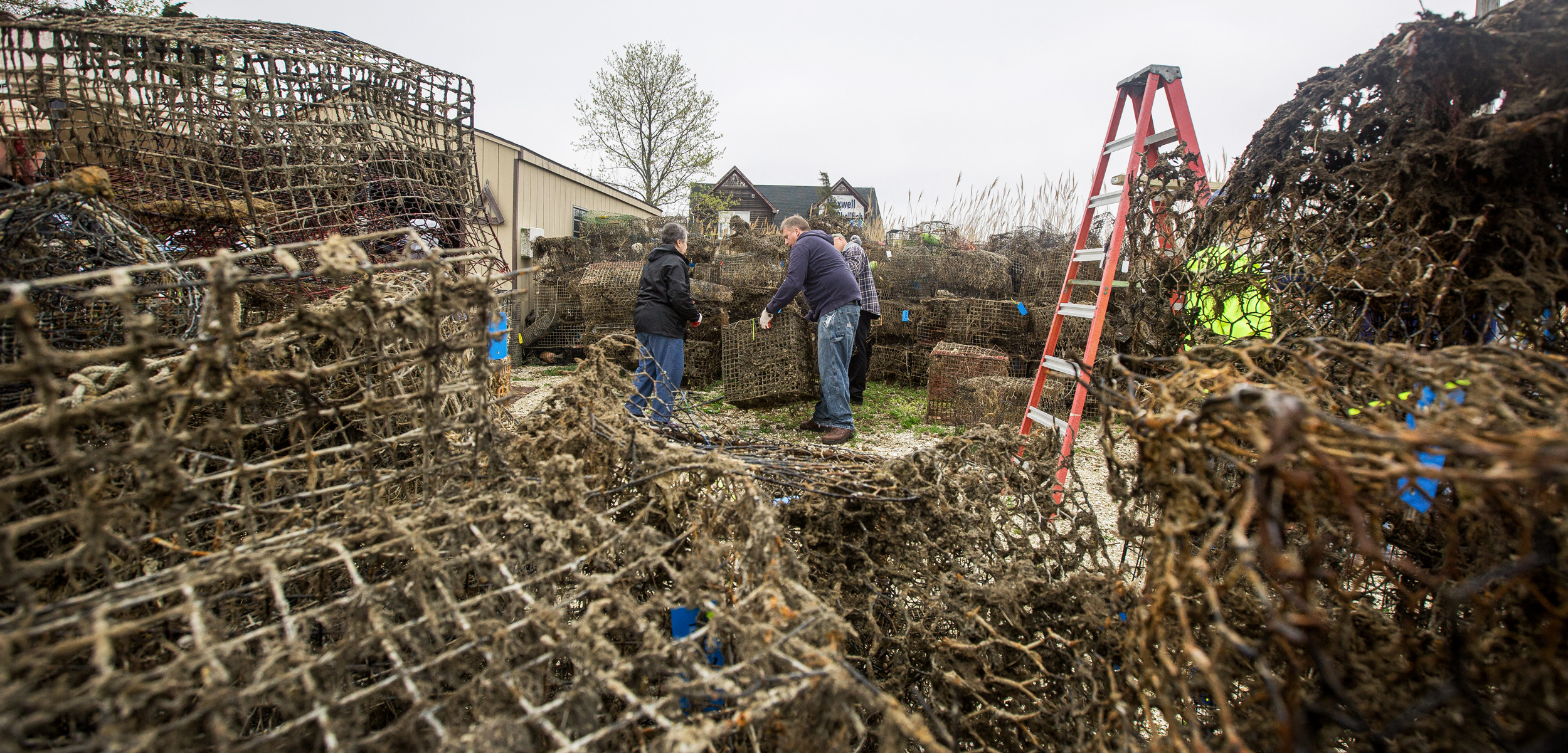 Workers sort through abandoned crab traps