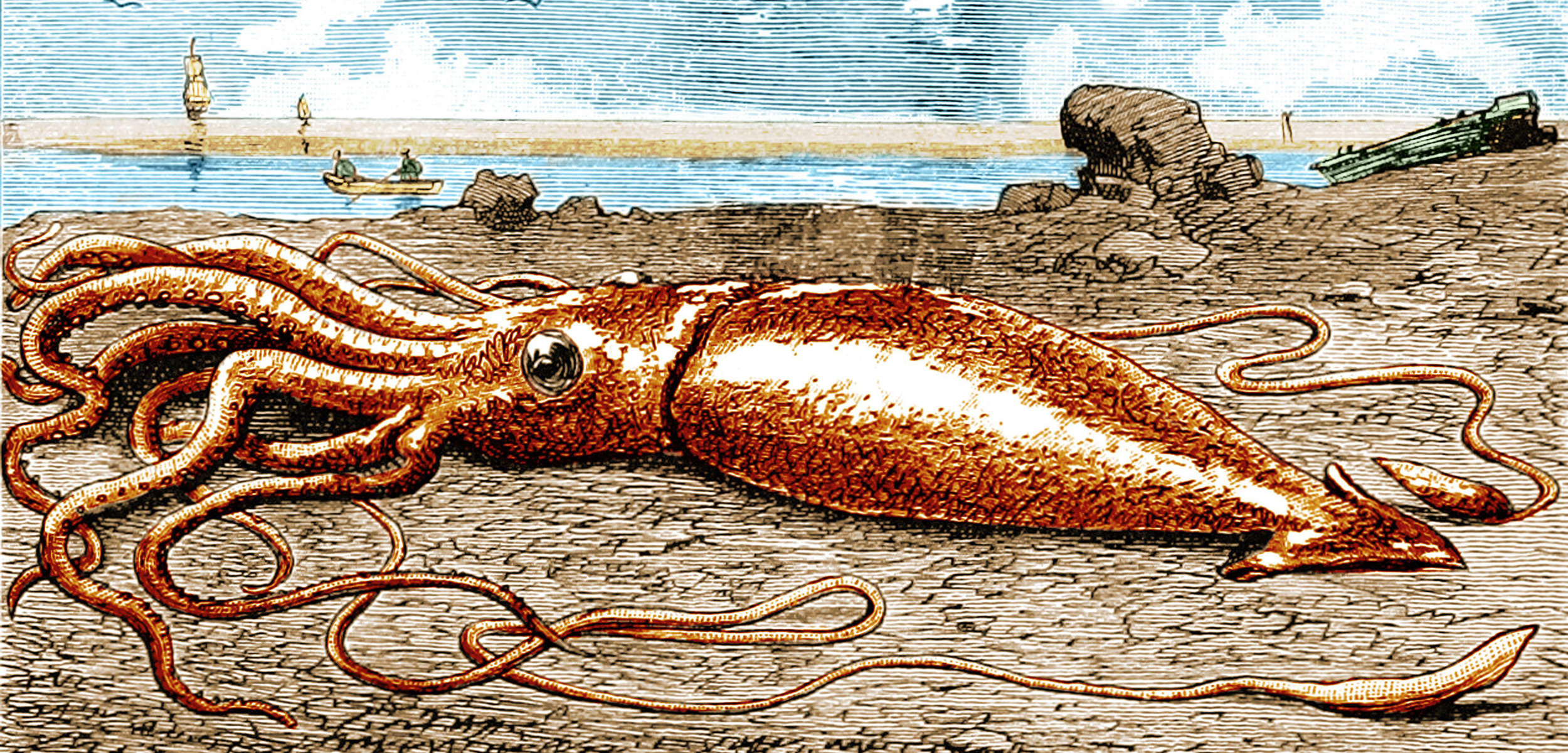 illustration of a giant squid