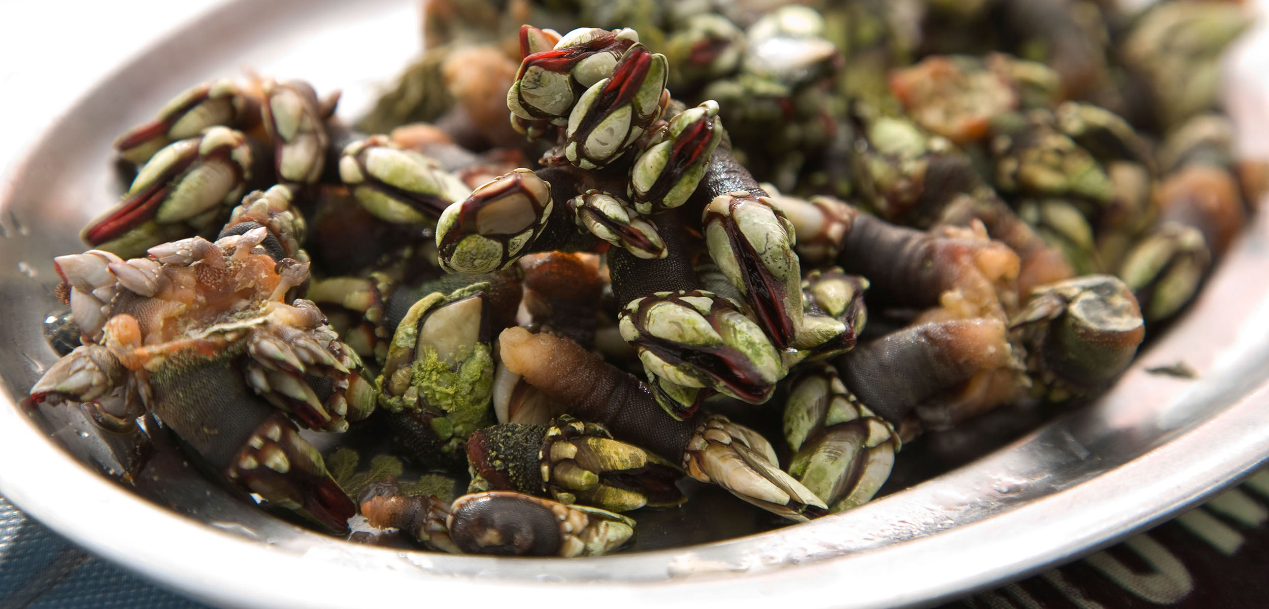 a plate of percebes or gooseneck barnacles