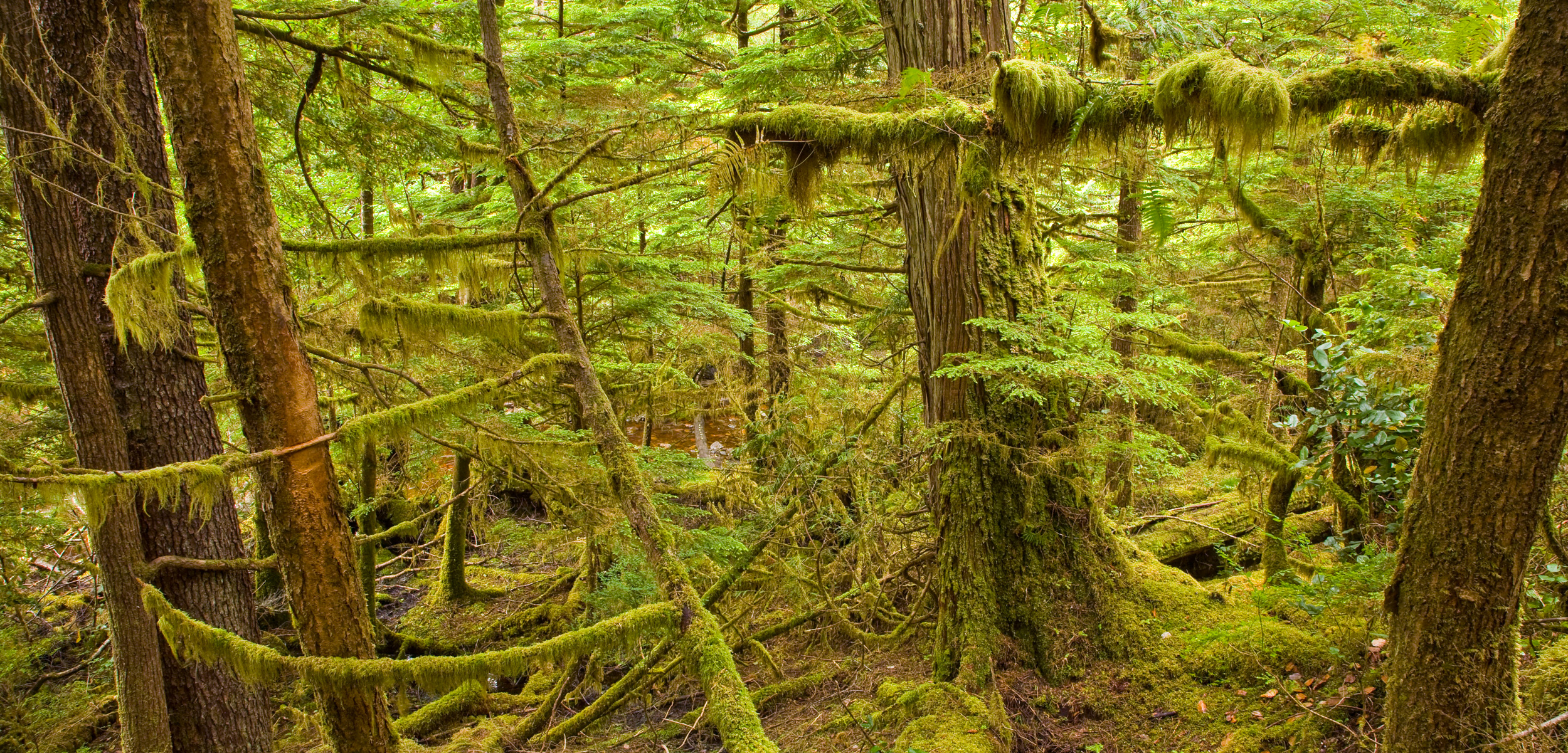 Moresby Island in Gwaii Haanas National Park Reserve