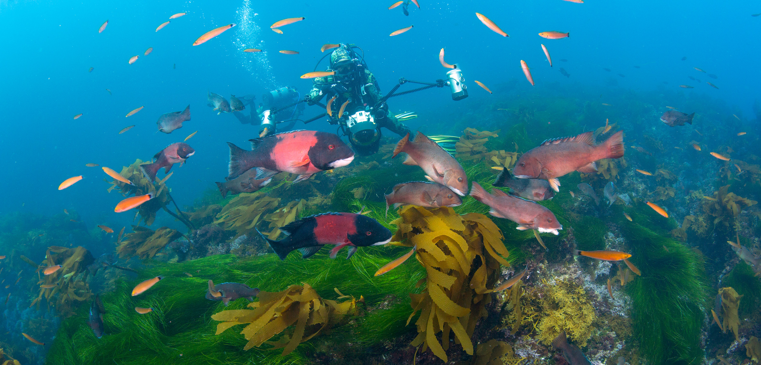 scuba divers and fish at Cortes Bank, California