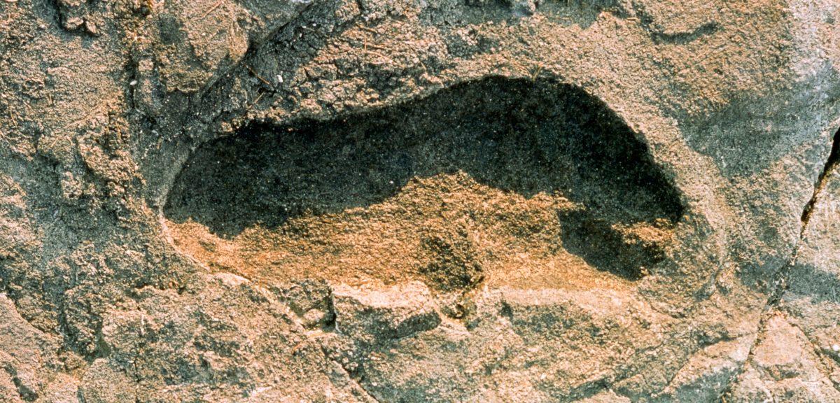 Single hominid footprint from Laetoli, Tanzania