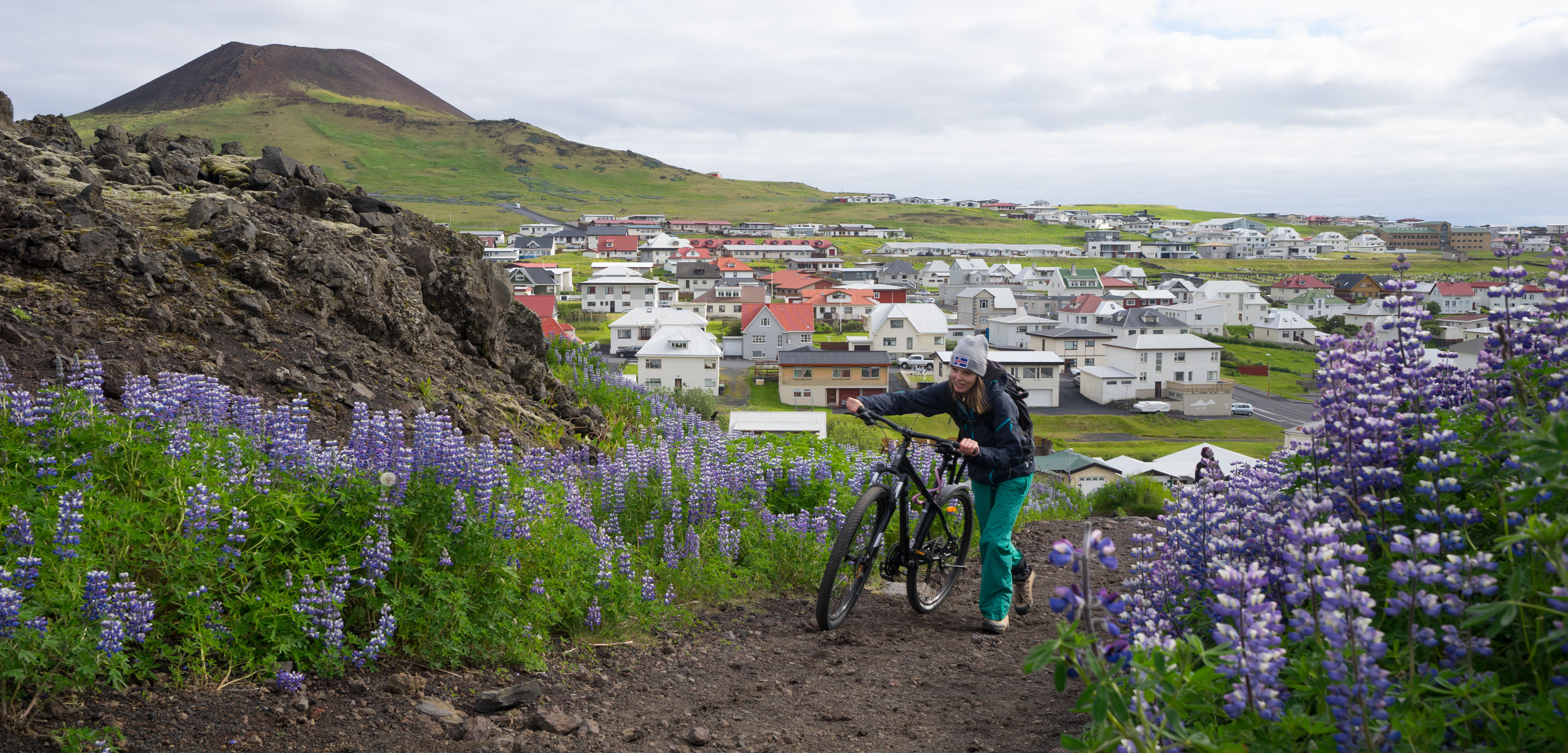 An icelandic woman pushes her bike up a hill surrounded by lupine