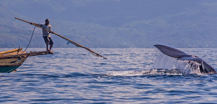 traditional subsistence whale hunt in Indonesia