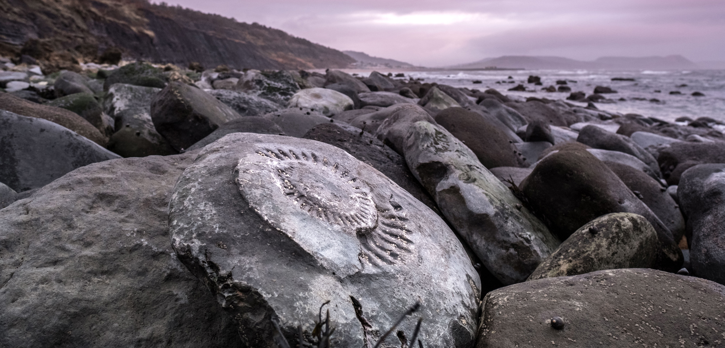 ammonite fossil on beach