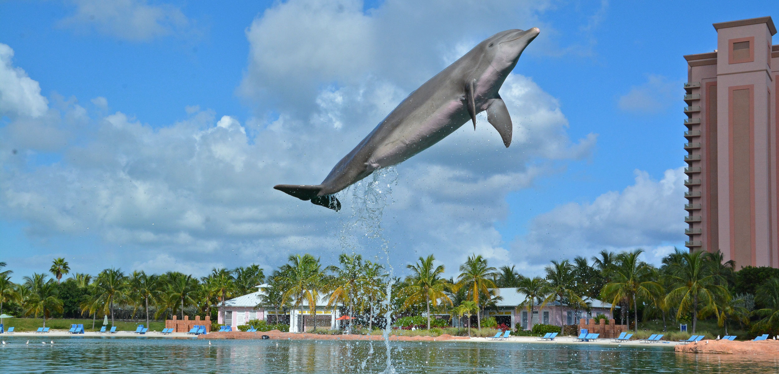 kelly the dolphin jumping out of the water at Atlantis