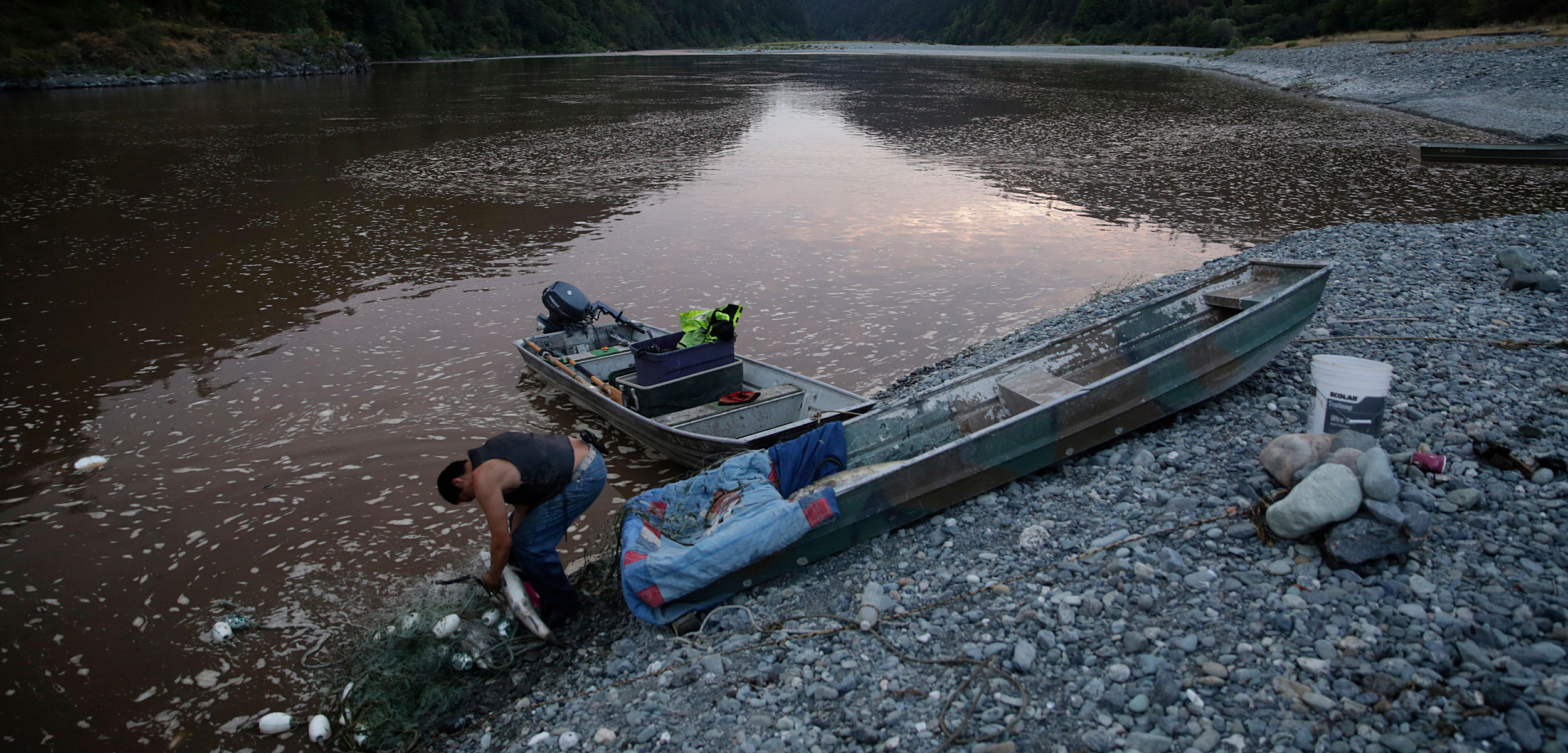 a member of the Yurok Indian Tribe, pulls salmon from his gill net on the Klamath River