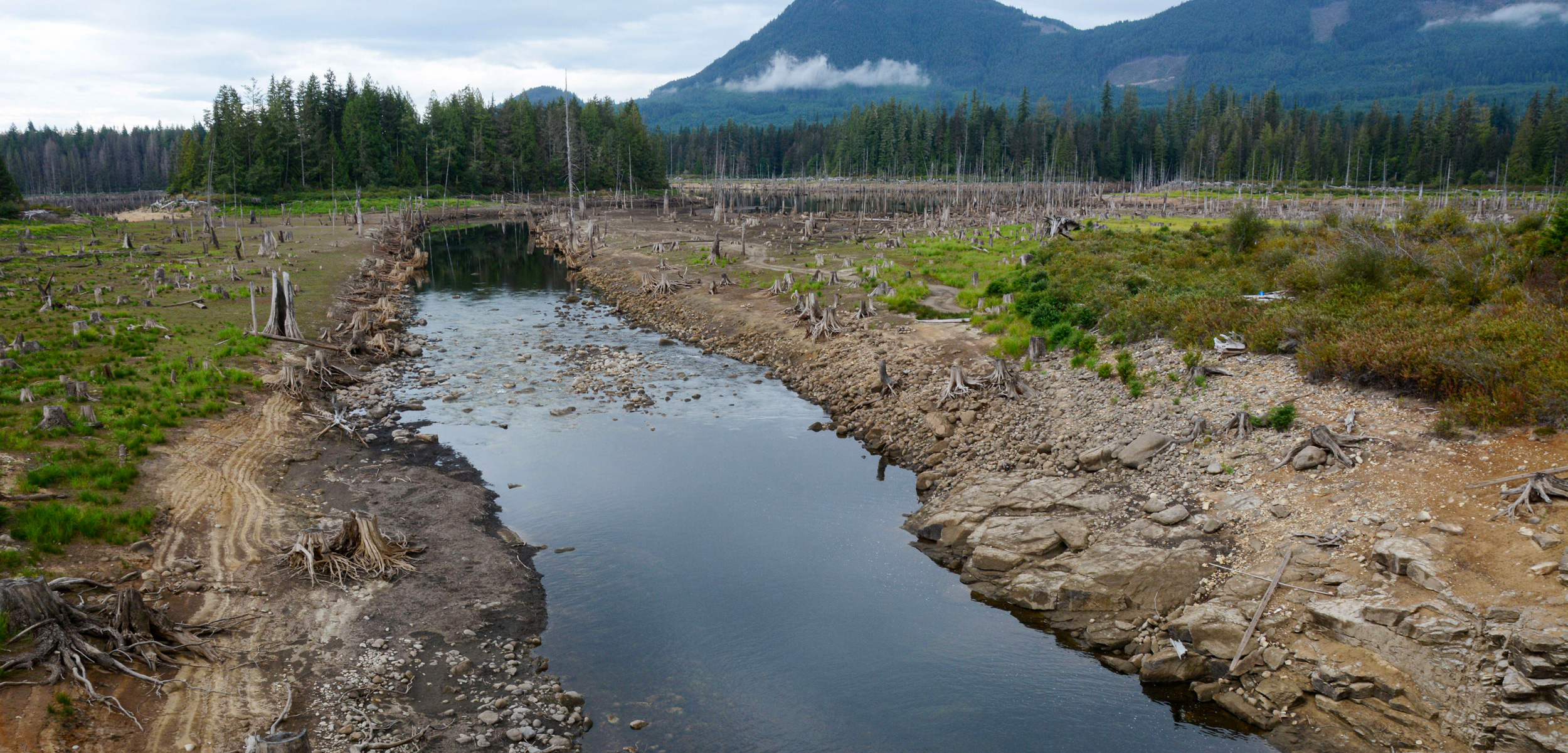 A forest landscape of clearcuts and tree stumps along a creek