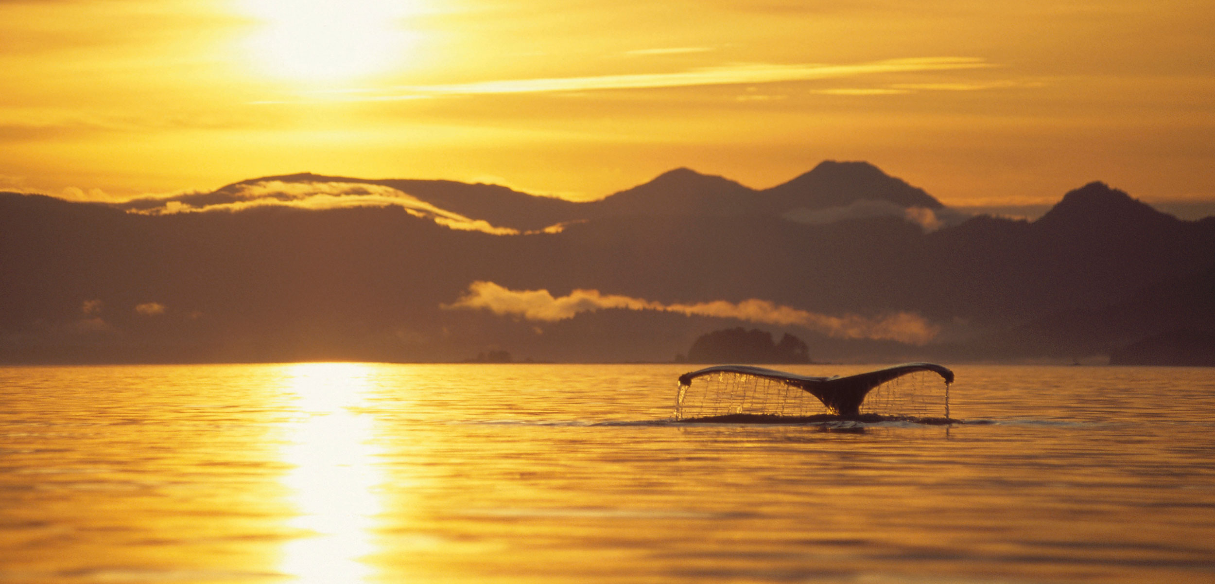 Humpback Whale (Megaptera novaeangliae) tail at sunset, Alaska