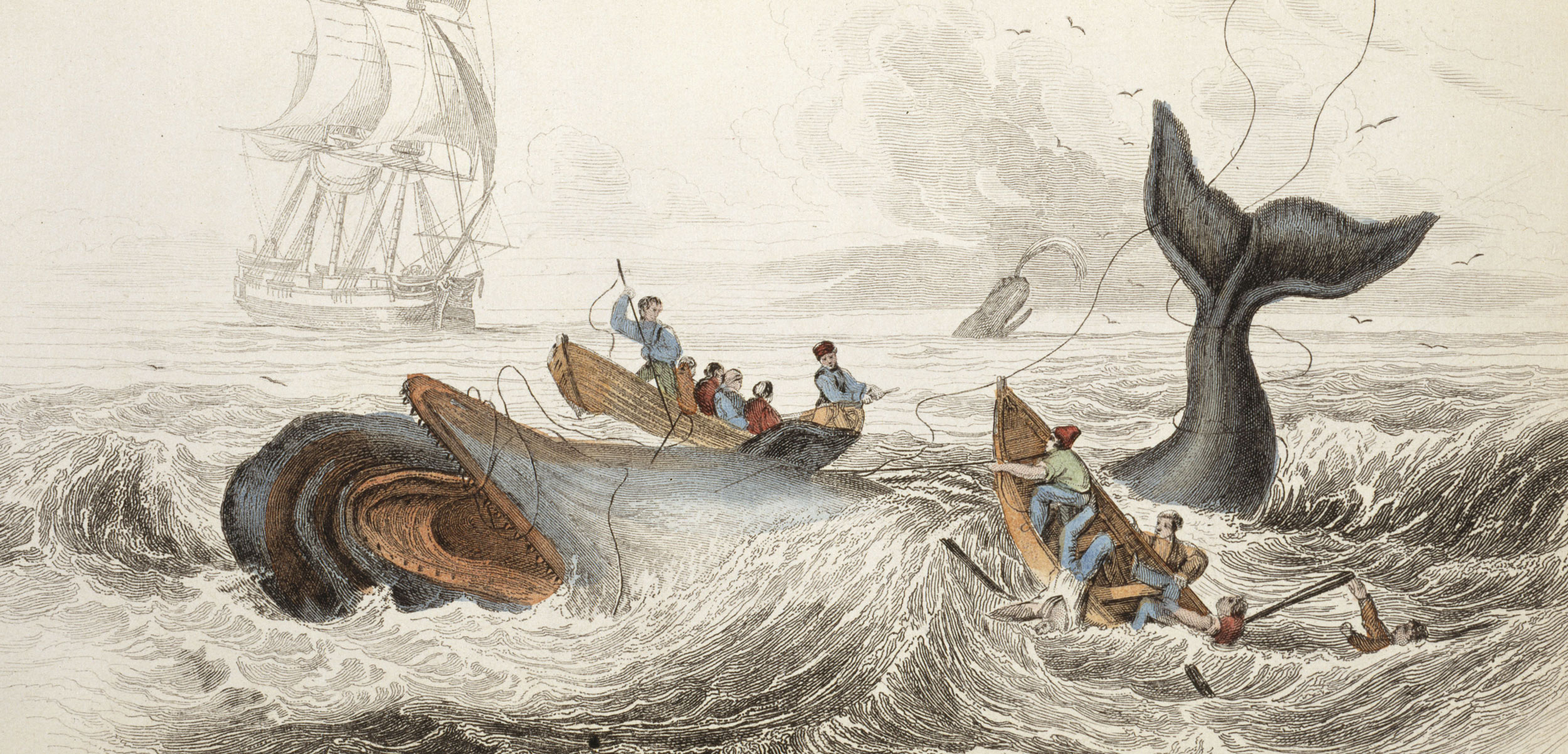engraving of sperm whale hunt