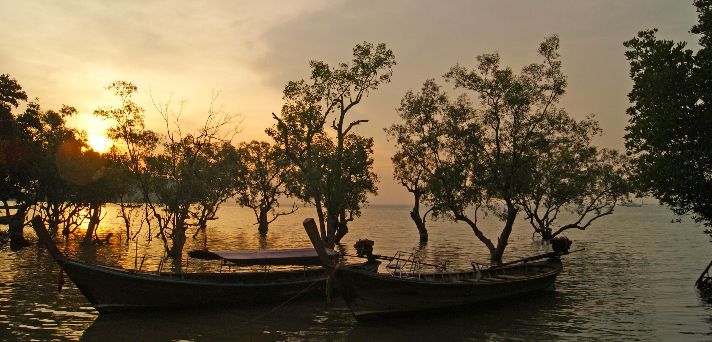 mangrove-diversity