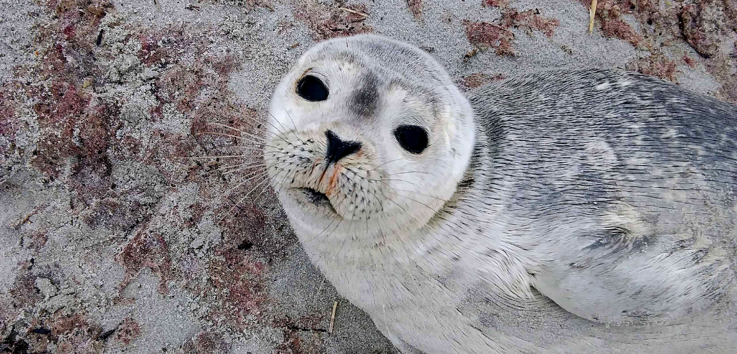 seal on a sandy beach