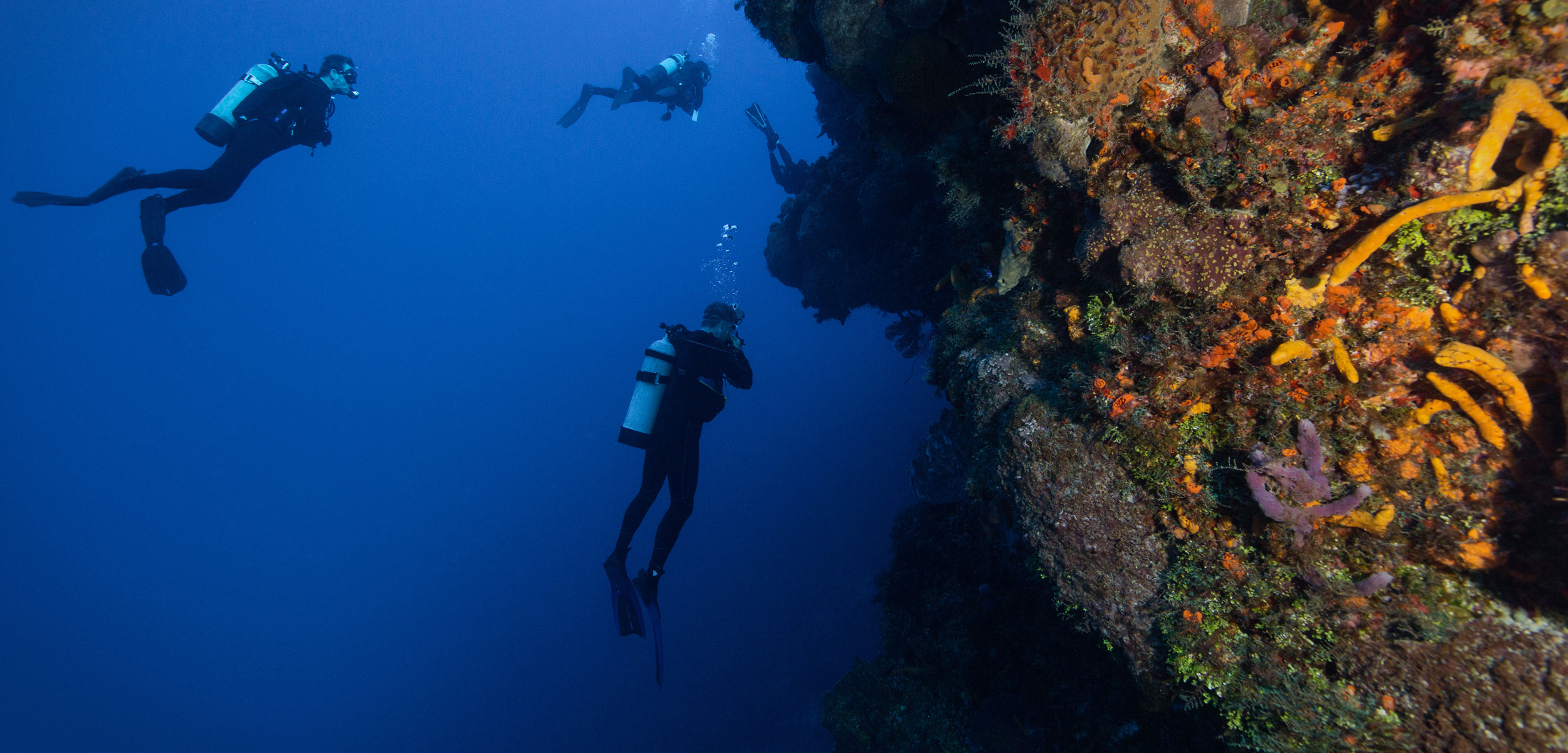 scuba divers exploring the reed off the coast of Cozumel, Mexico