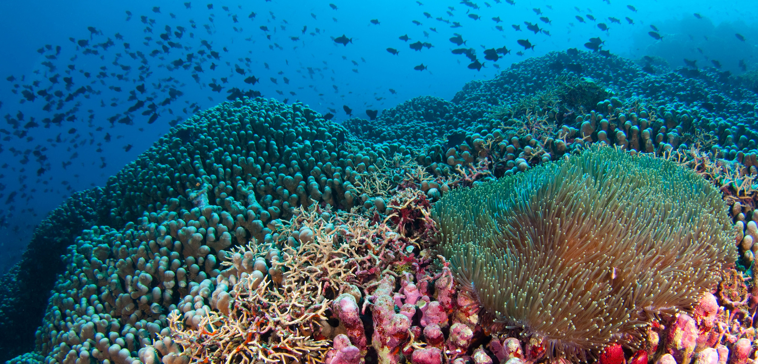 Coral reefs around Indonesia have been damaged by destructive fishing practices—those who care most about them are hoping local efforts can help restore the reefs to their former glory. Photo by Scubazoo/Alamy Stock Photo