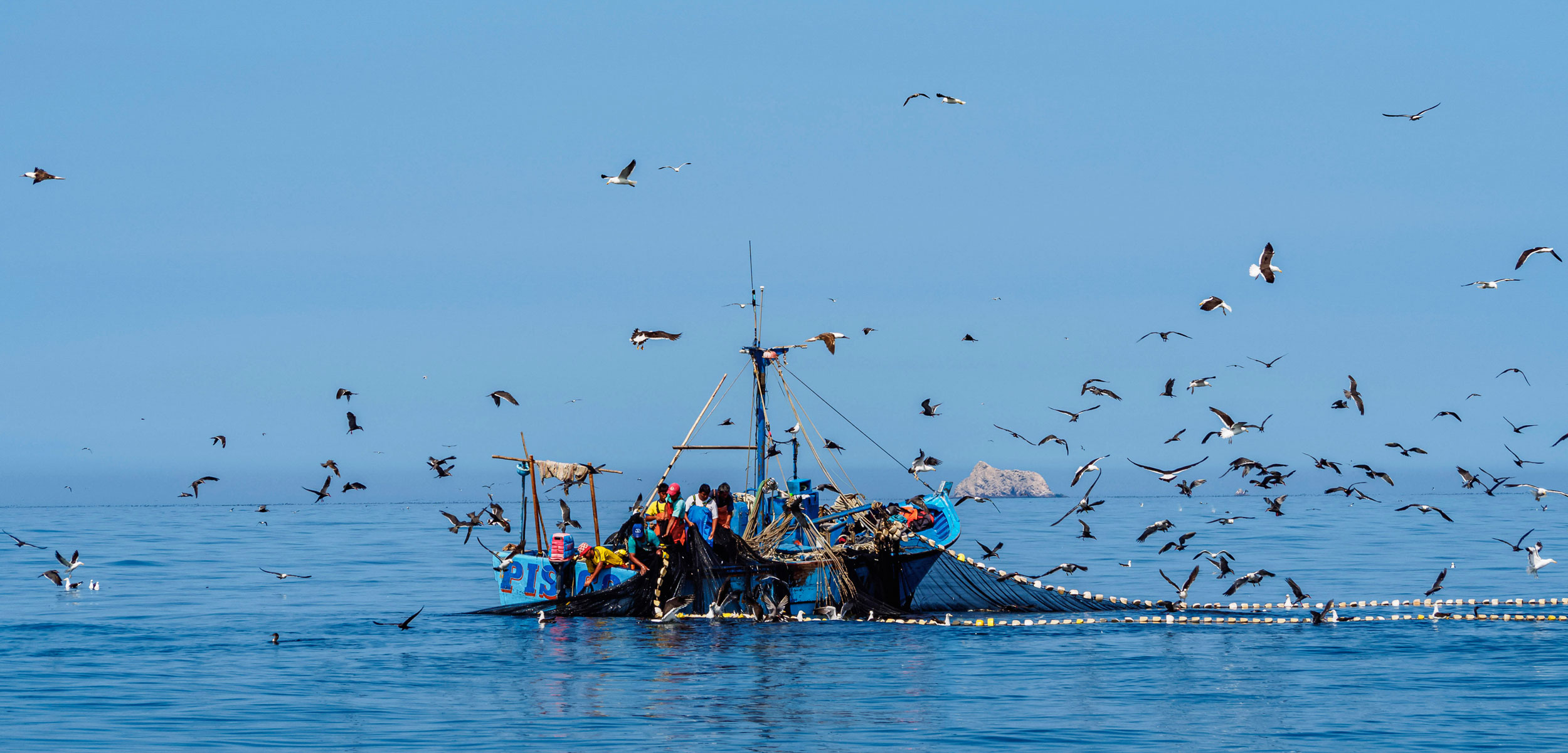 Boat in ocean with fisherman onboard pulling up a net surrounded by birds.