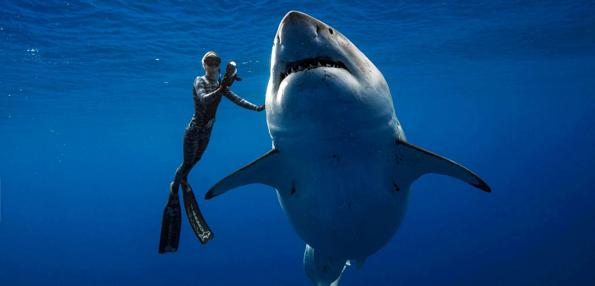 Ocean Ramsey touching a great white shark