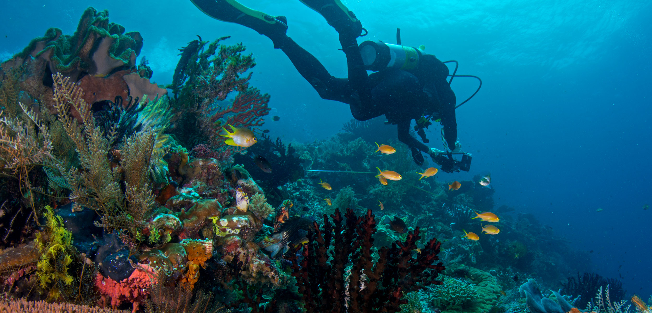 A diver from the nonprofit organization Reef Life Survey swims over an Indonesian reef