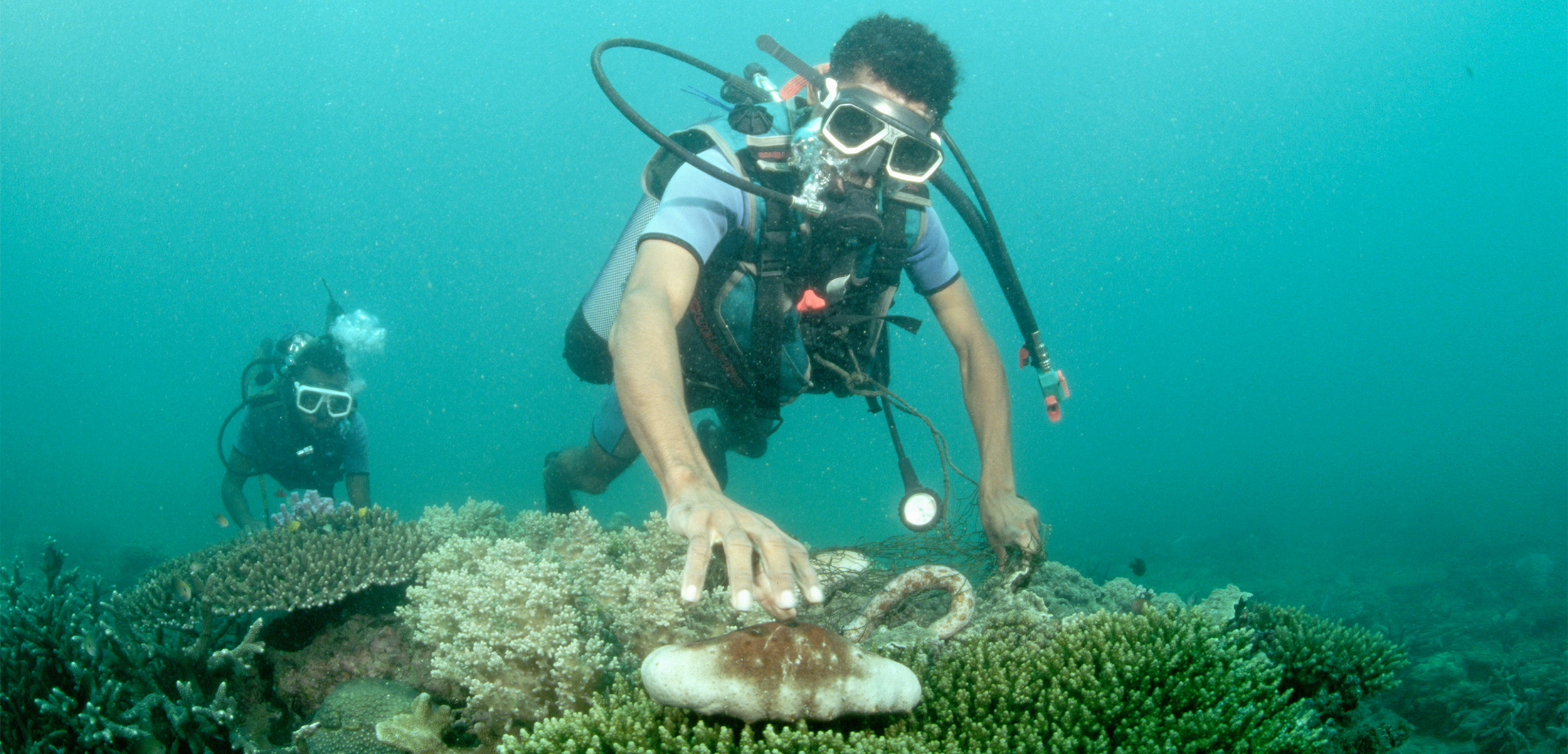 The global harvest of sea cucumbers has skyrocketed over the past three decades, and in many places, the fishery quickly collapses from over-exploitation. Photo by Arne Hodalic/Corbis