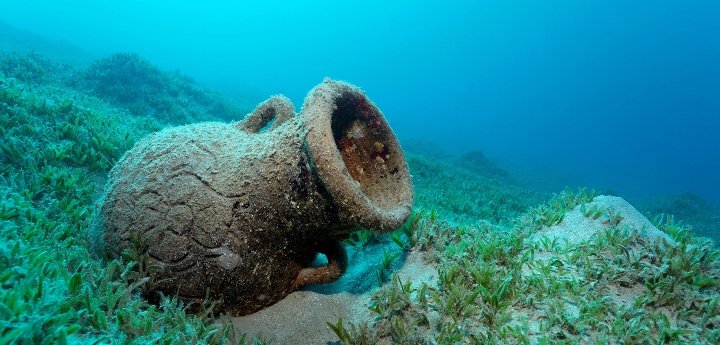 Amphora on seagrass meadow, Red Sea, Makadi Bay, Hurghada, Egypt