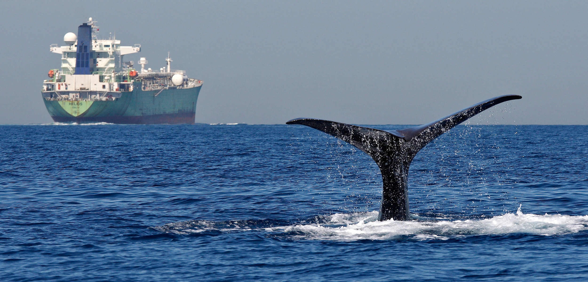 Sperm whale fluke and cargo ship