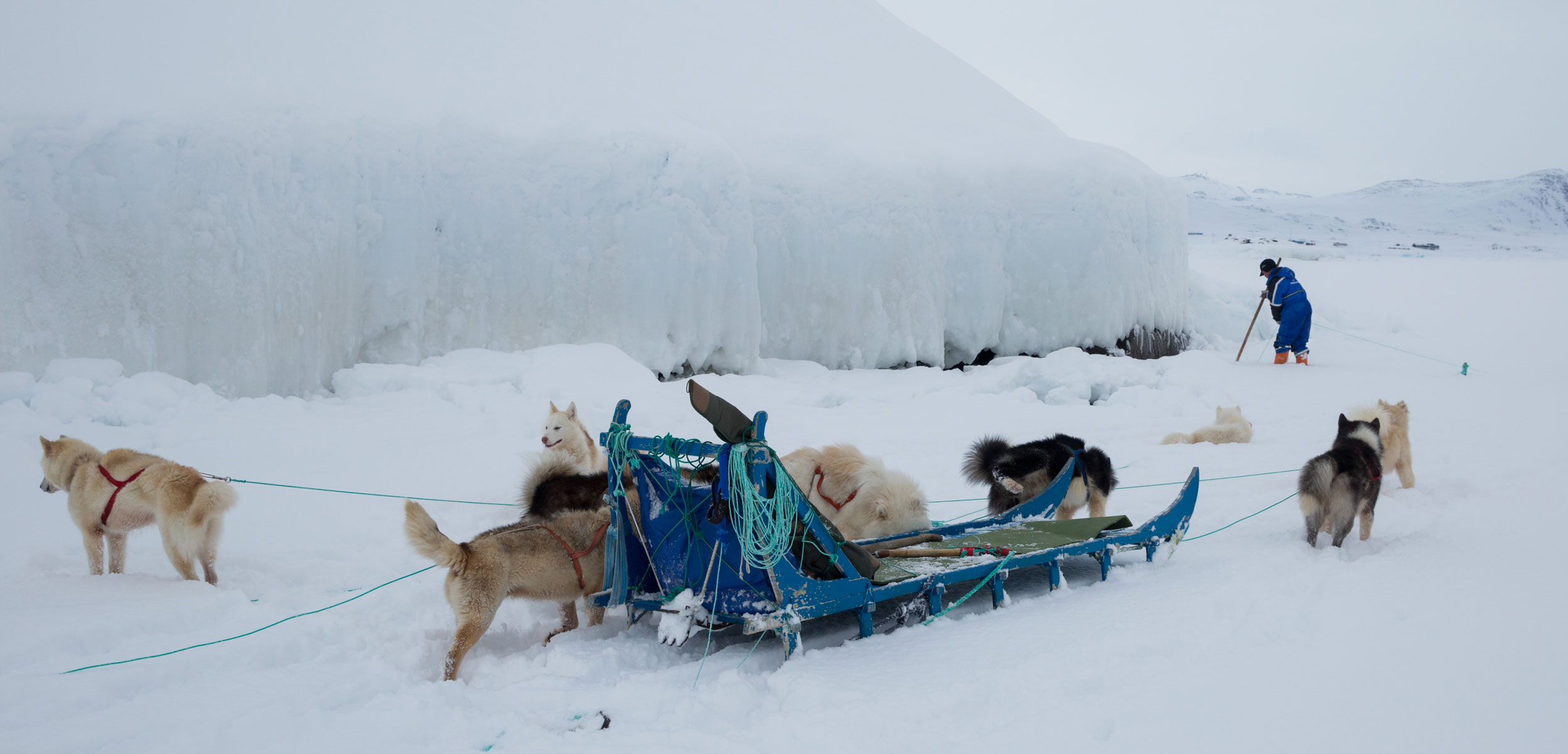 Sled dogs take a break from charging across the tundra in eastern Greenland while hunter Bendt Abelsen checks his net for seals. Photo by Ken Bower