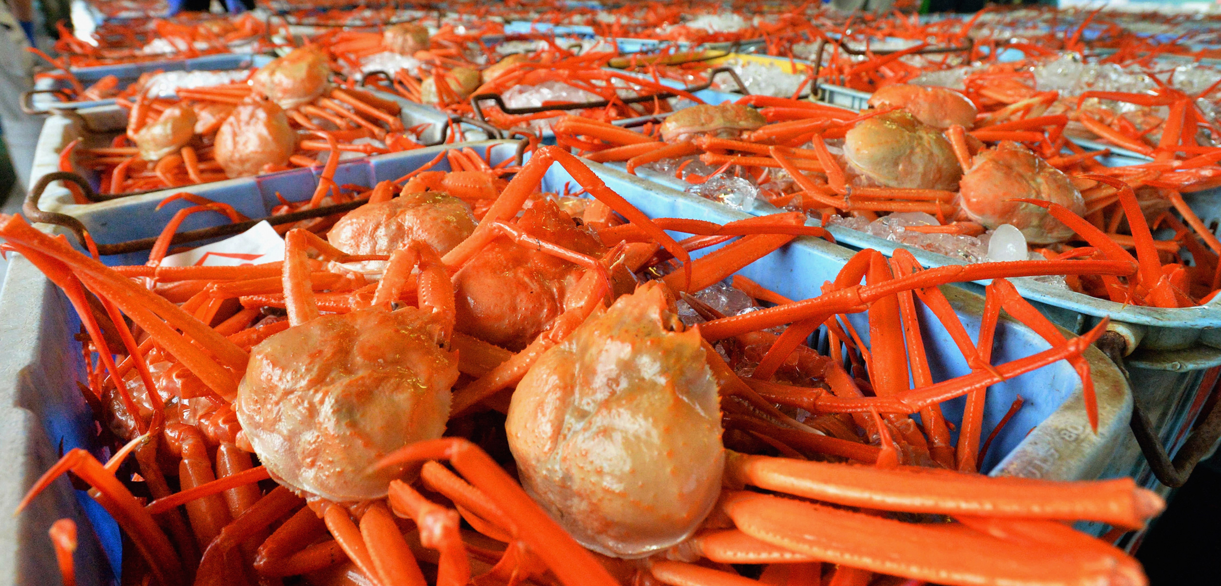The snow crab fishery is valuable, but the ongoing disputes over fishing rights in Svalbard speak to a much larger issue. Photo by the Asahi Shimbun/Getty Images