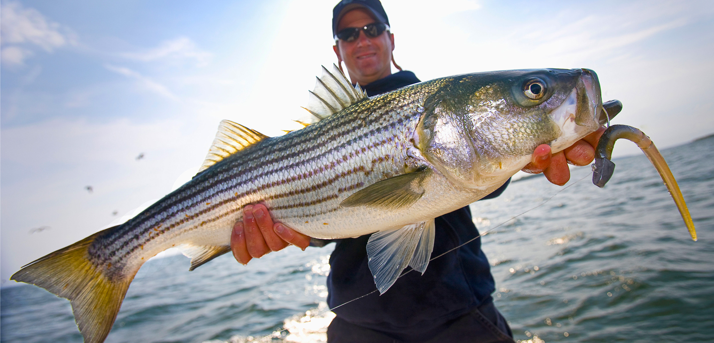 fisher with striped bass