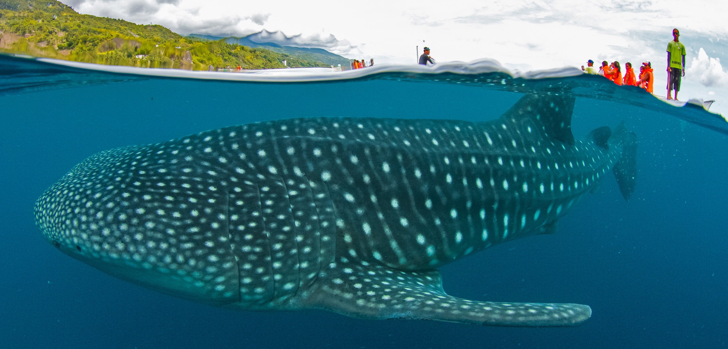 tourists get close to a whale shark in the Philippines