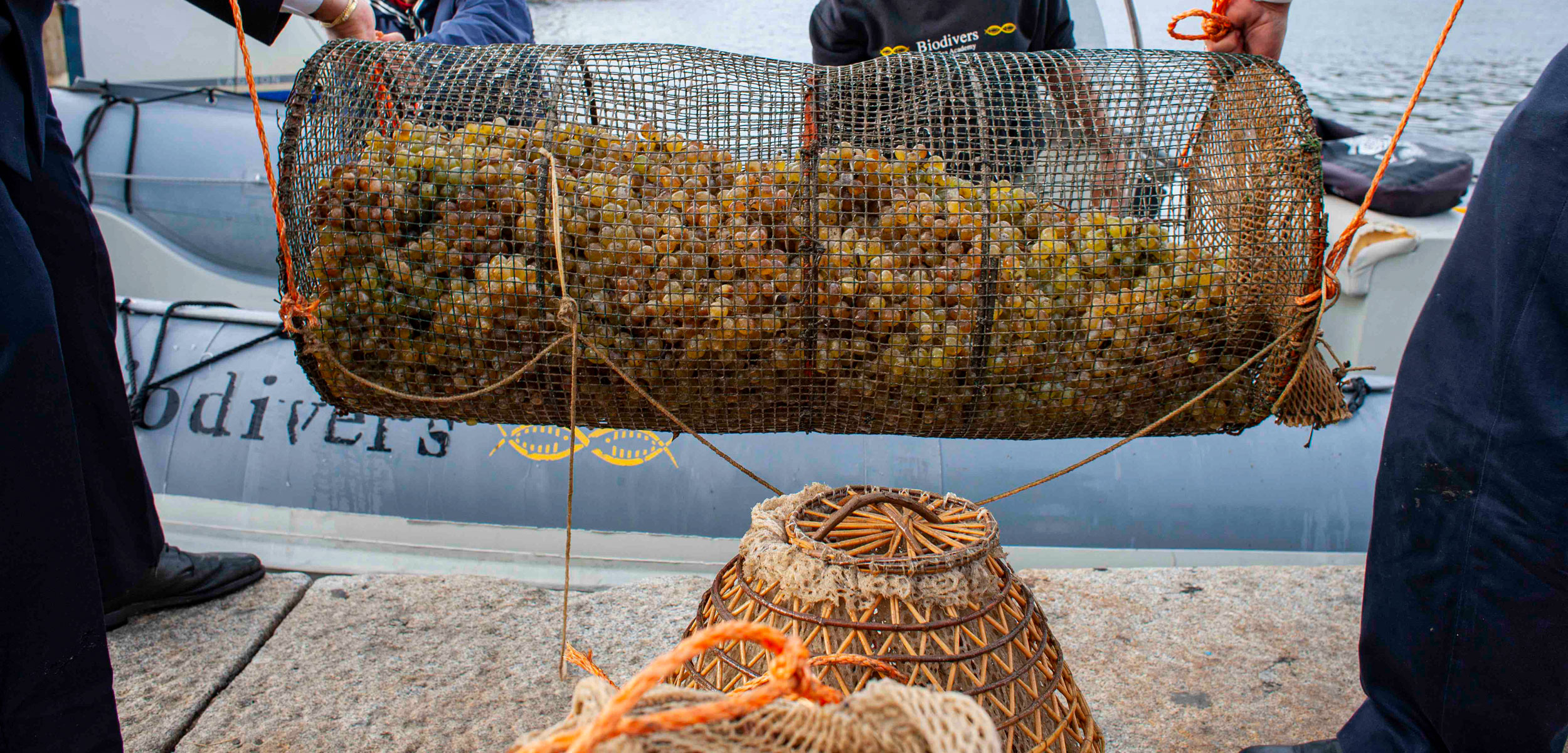 basket of grapes at dock